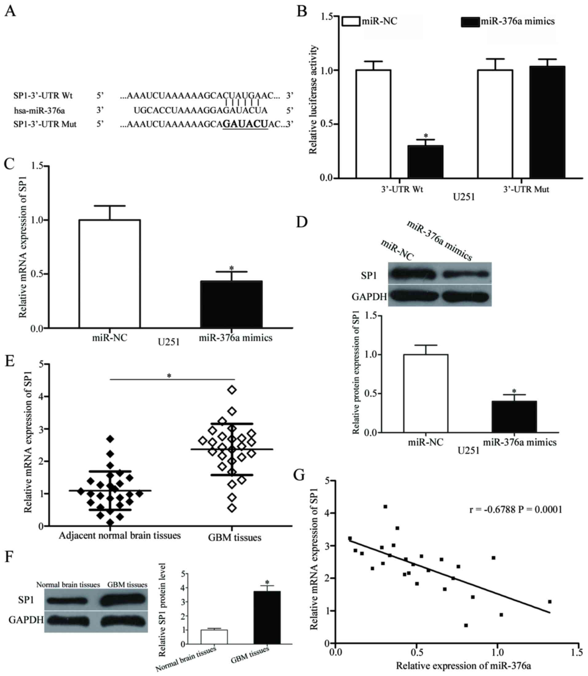MicroRNA‑376a inhibits cell proliferation and invasion in