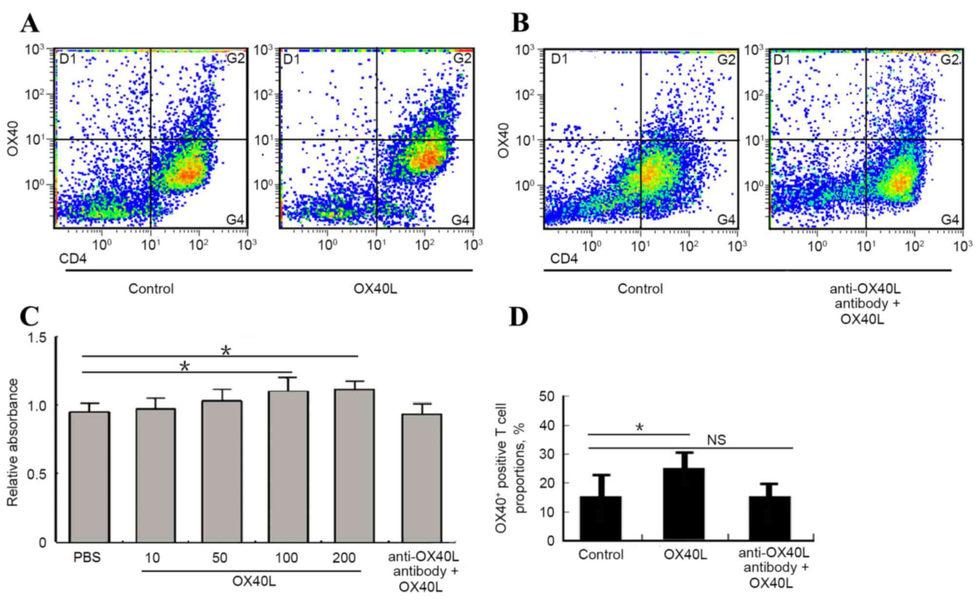 Crucial role of OX40/OX40L signaling in a murine model of asthma