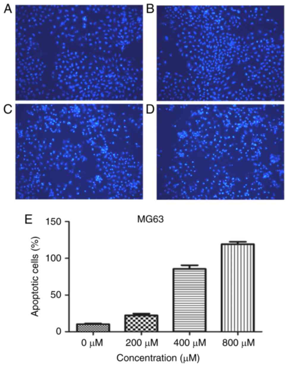 L‑mimosine induces caspase‑9‑mediated apoptosis in human