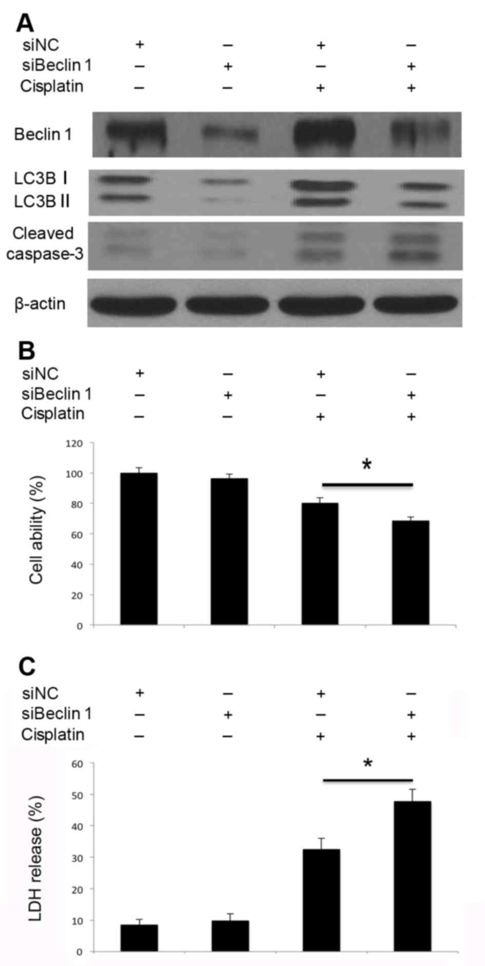 Autophagy inhibitor chloroquine combined with bevacizumab