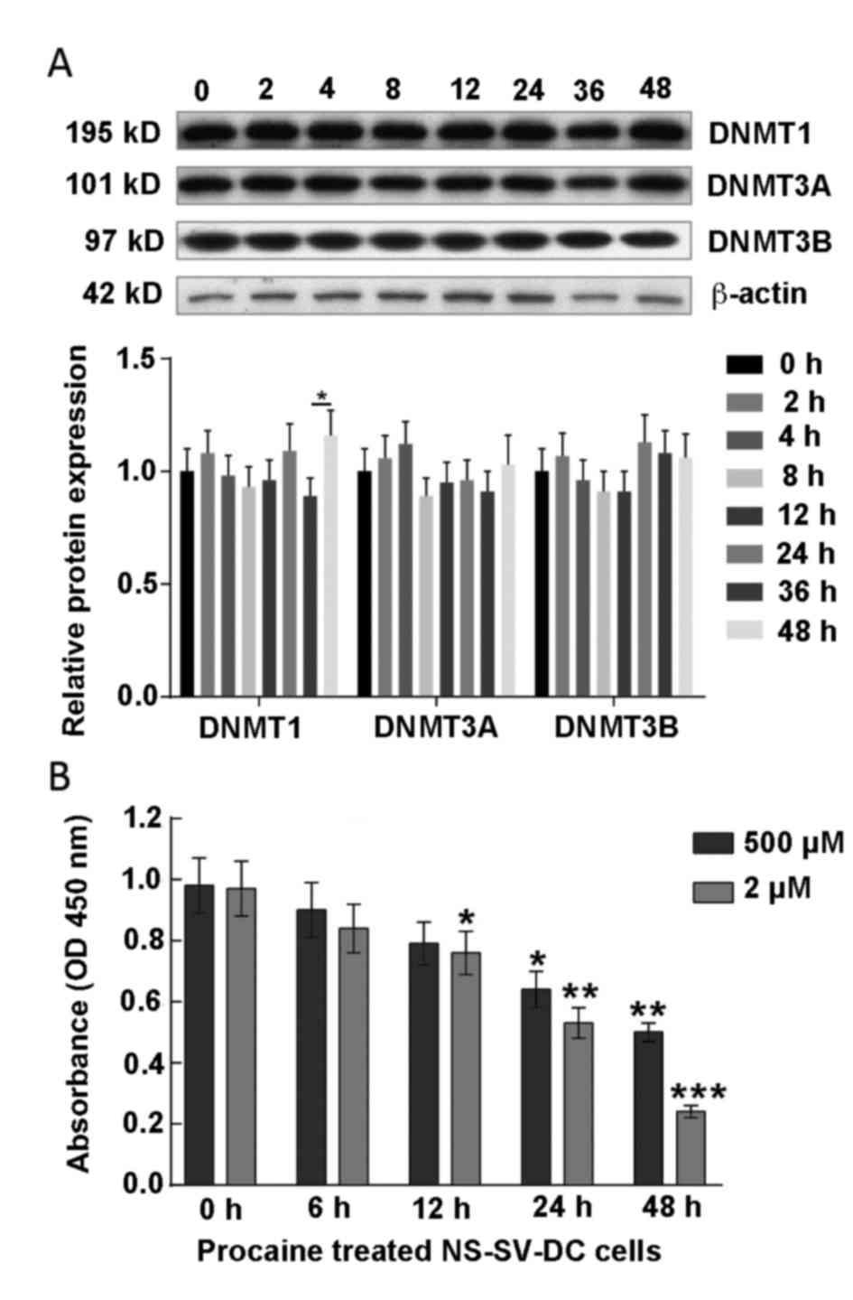 Procaine stimulates aquaporin‑5 expression in human salivary