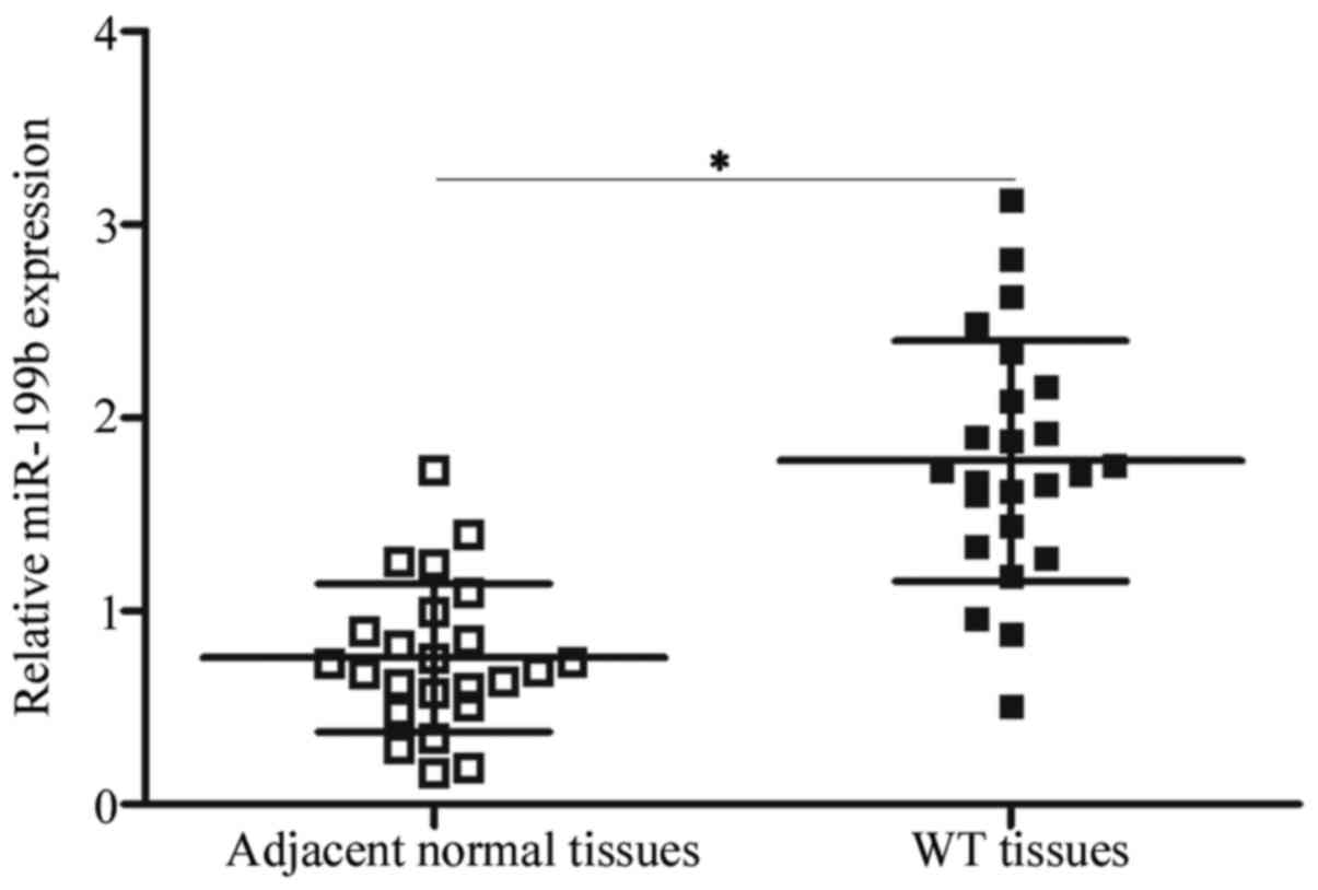 Figure 1. miR-199b expression is upregulated in WT tissues. The total RNA  of 24 paired WT and adjacent normal tissues was isolated and reverse ...