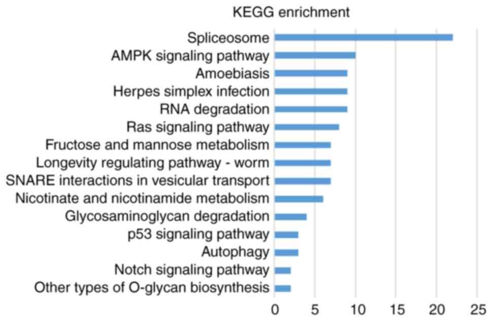 Label‑free quantitative proteomics and bioinformatics analyses of