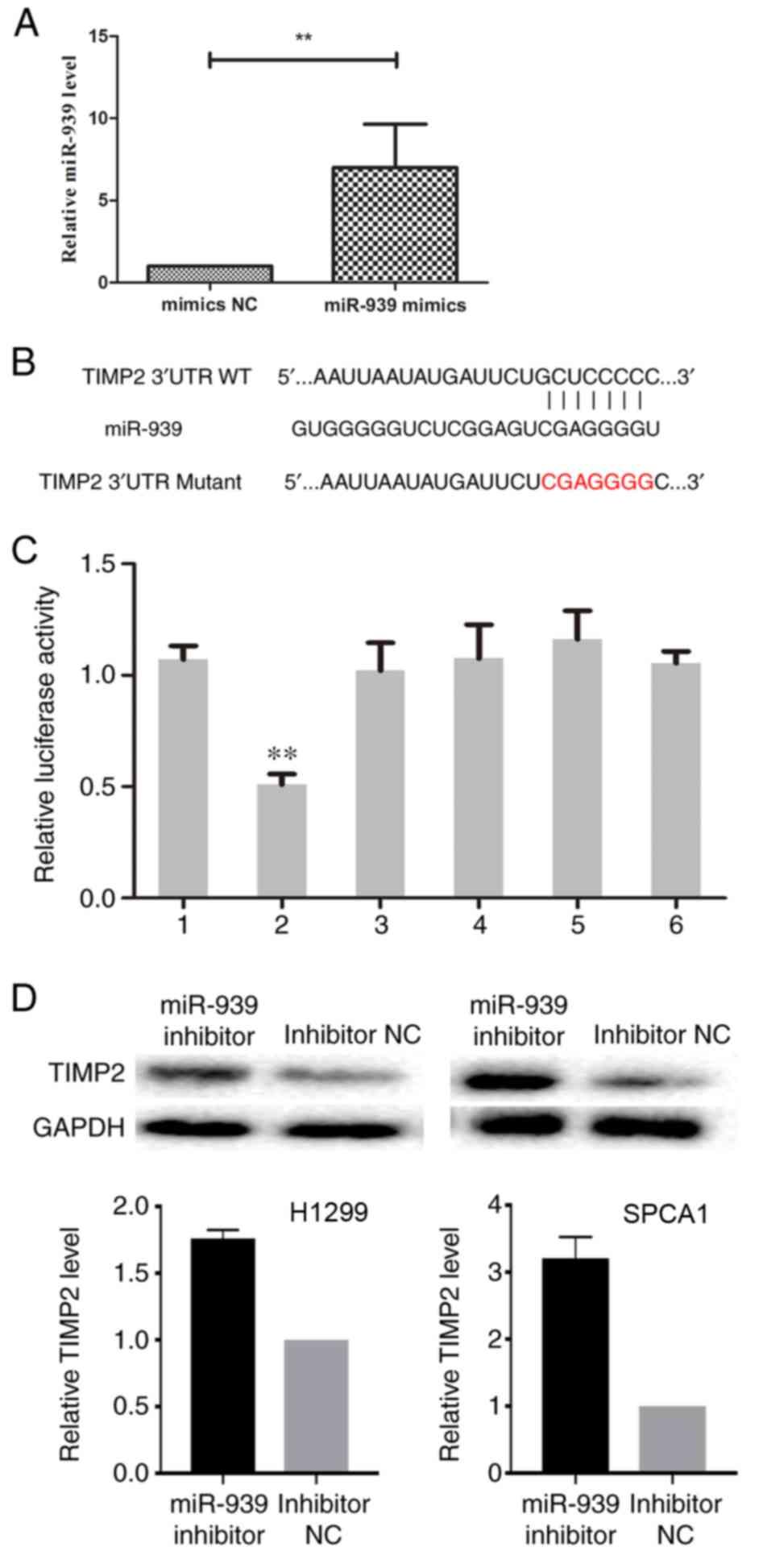 Inhibition of microRNA‑939 suppresses the development of human non