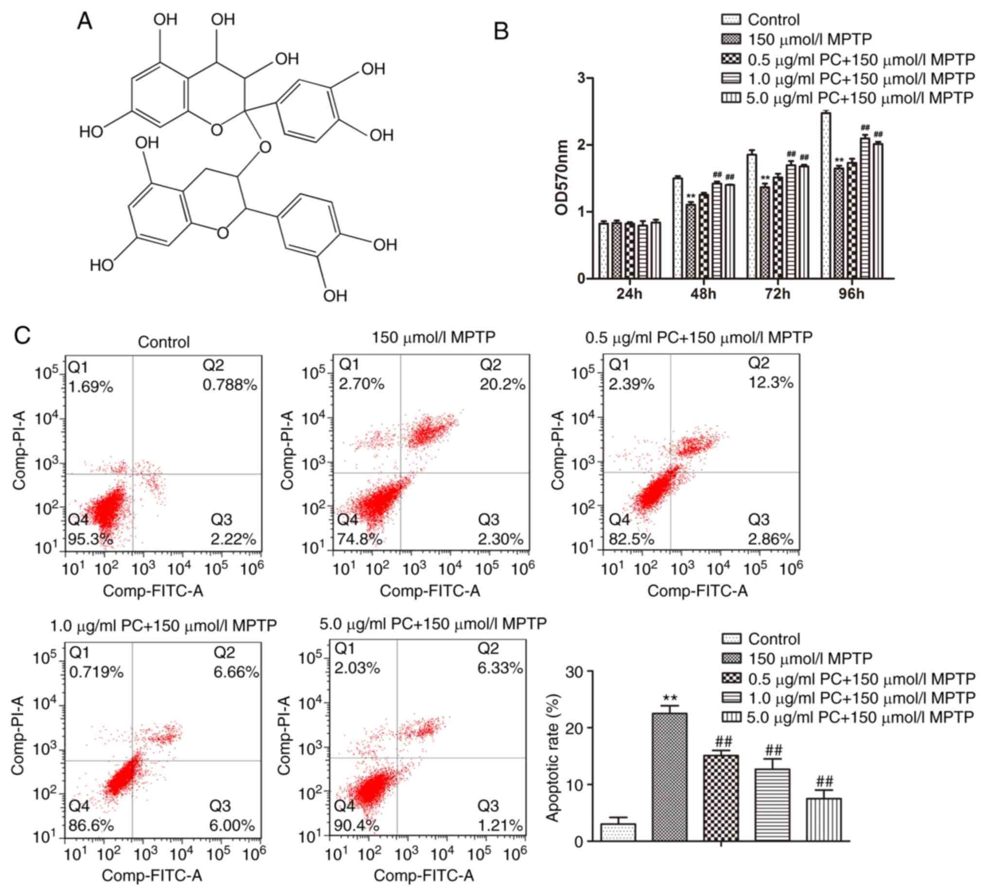 Proanthocyanidins exert a neuroprotective effect via ROS/JNK
