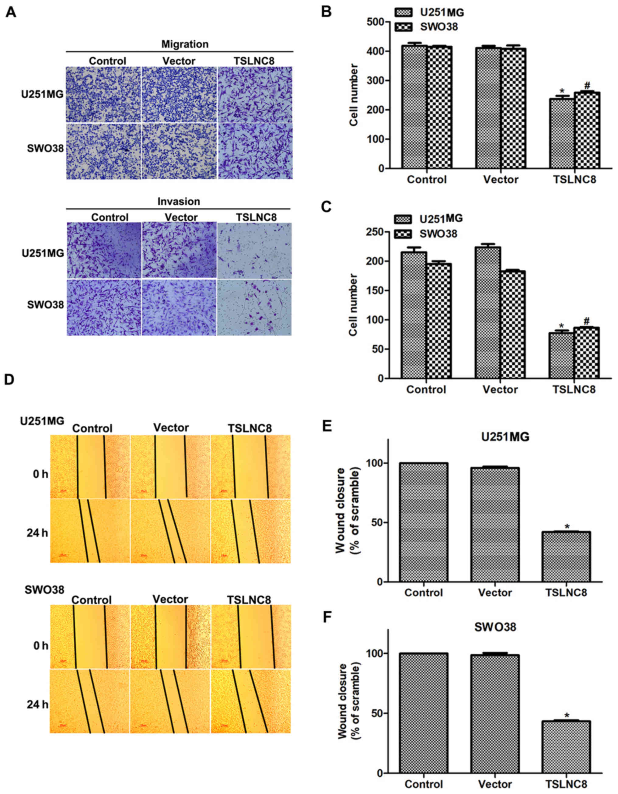 Long noncoding RNA TSLNC8 suppresses cell proliferation and