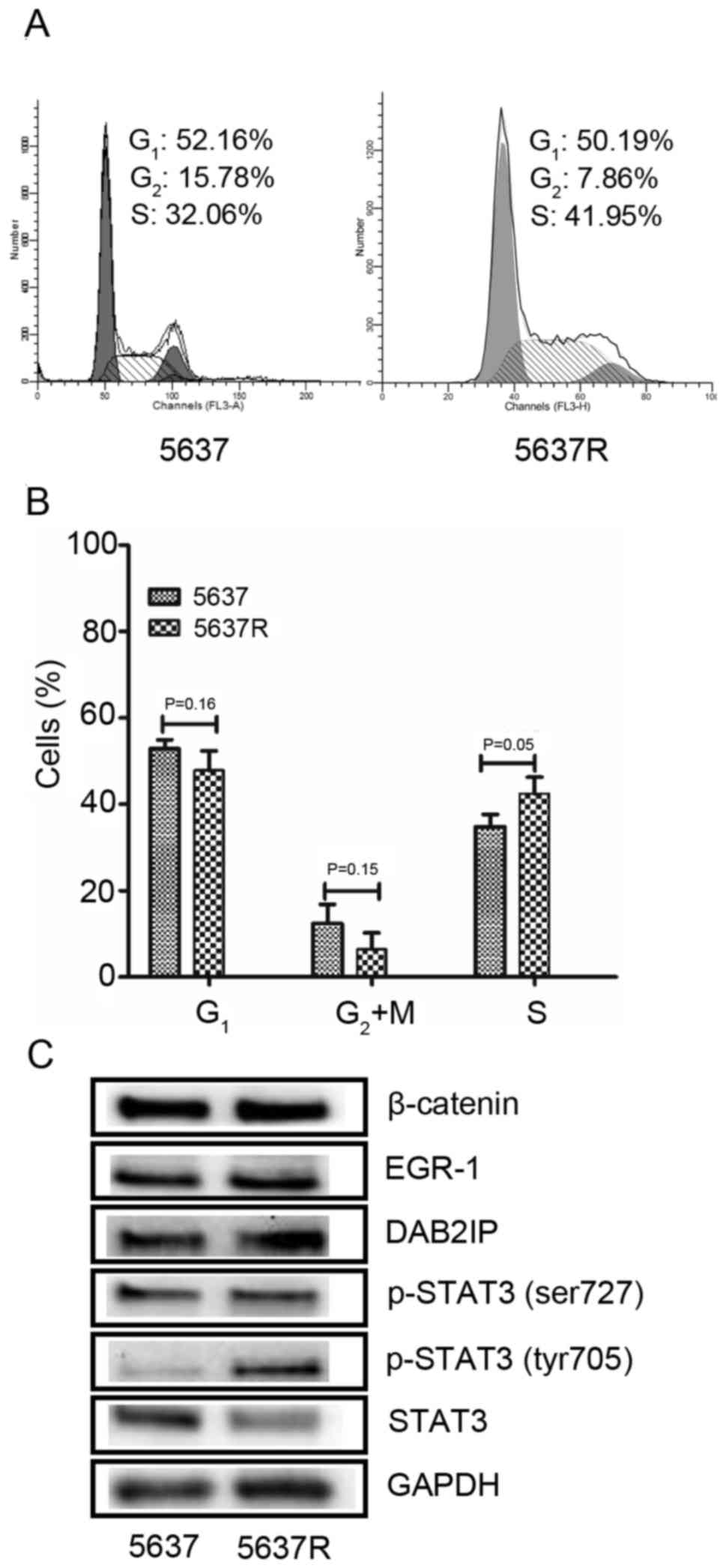 Long term exposure to γ‑rays induces radioresistance and