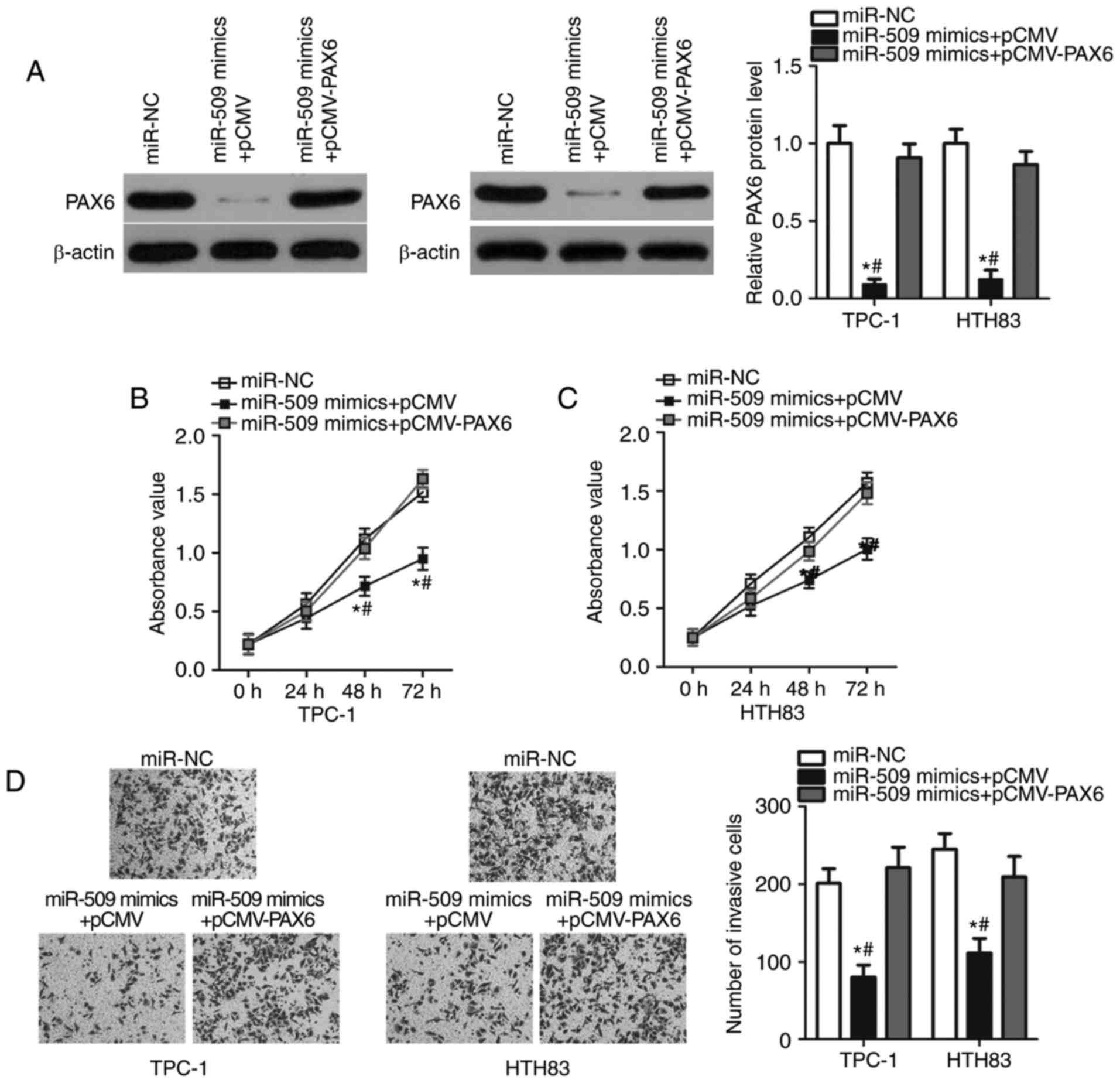 MicroRNA‑509 targets PAX6 to inhibit cell proliferation and invasion