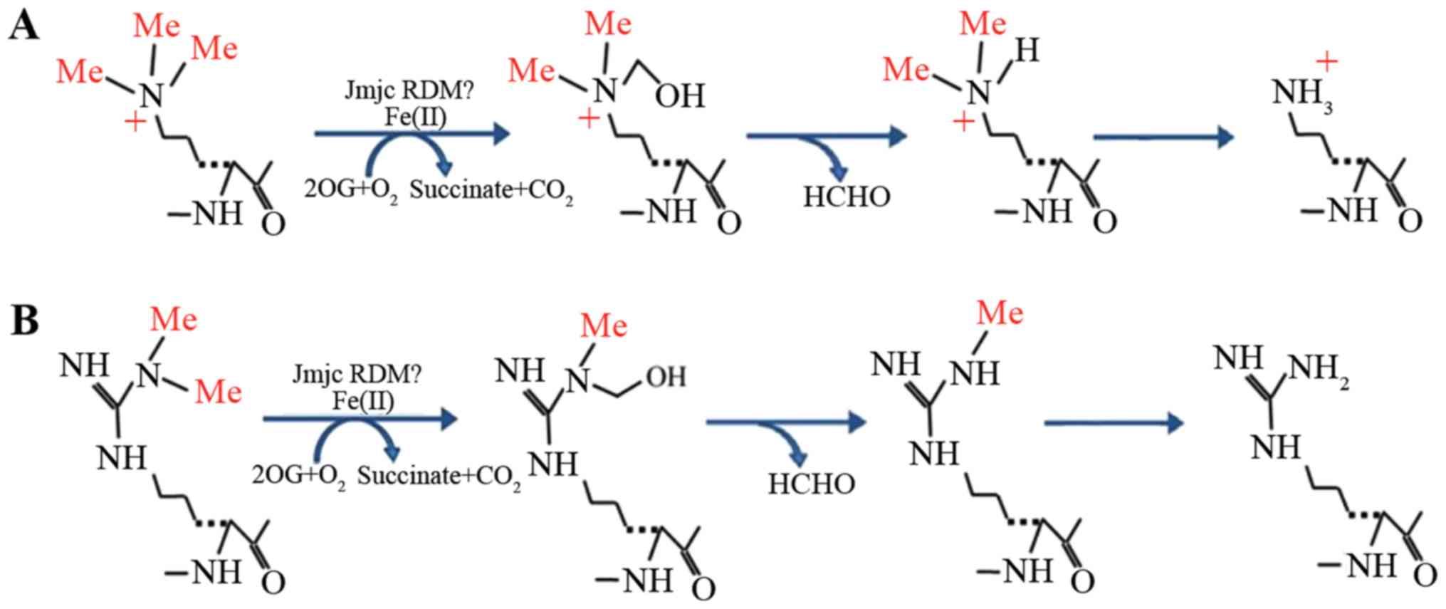 Regulation of histone arginine methylation/demethylation by