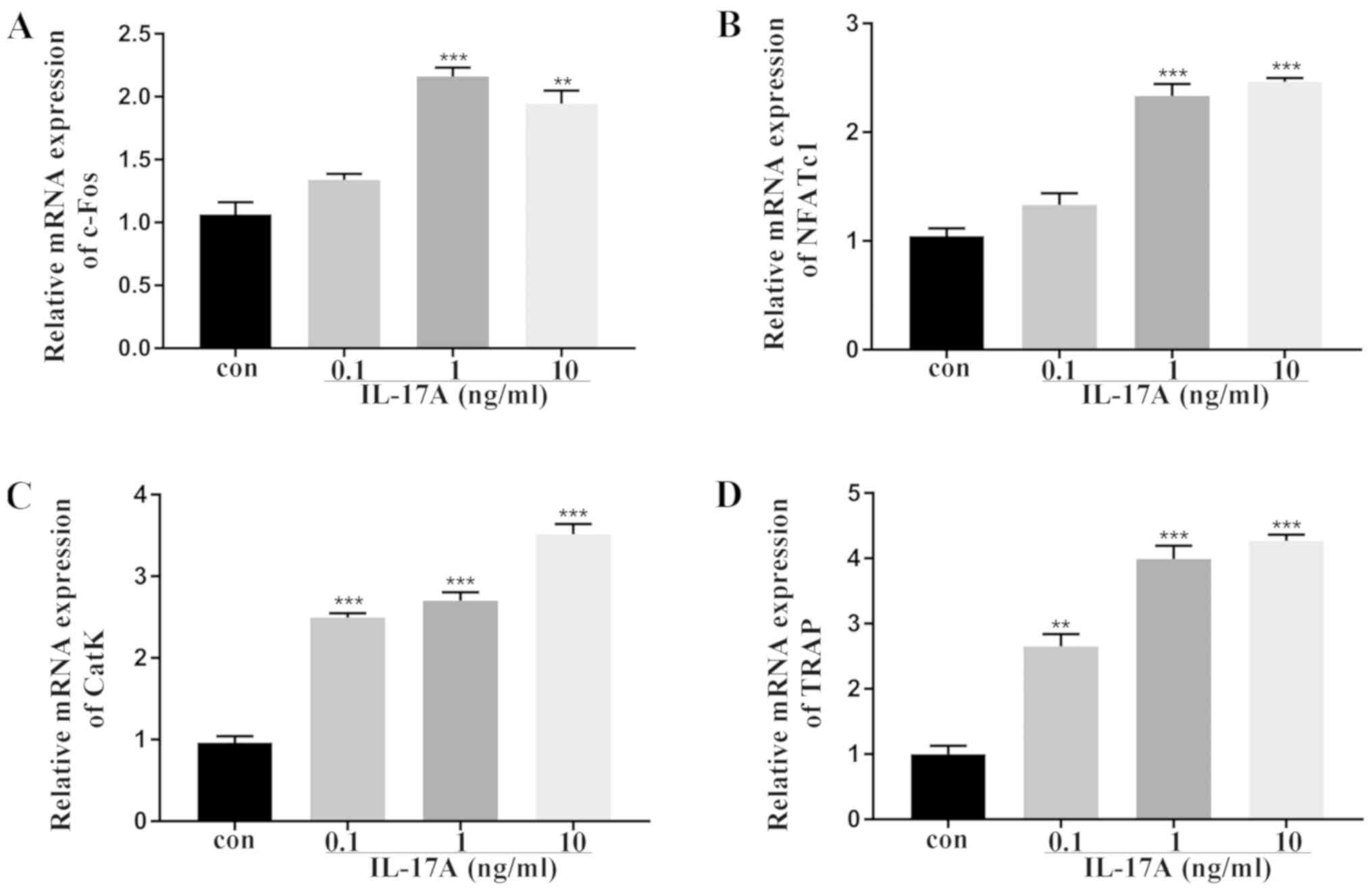 Interleukin‑17A facilitates osteoclast differentiation and