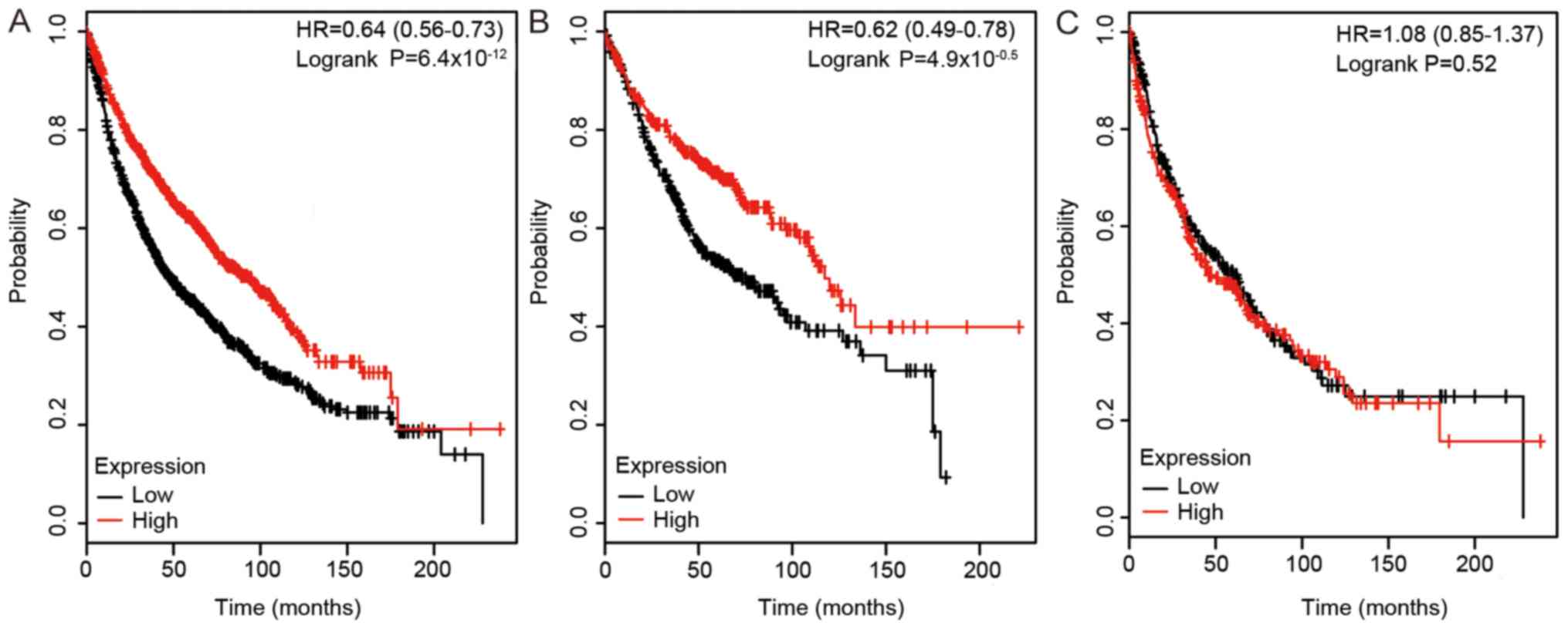 High expression of DLC family proteins predicts better