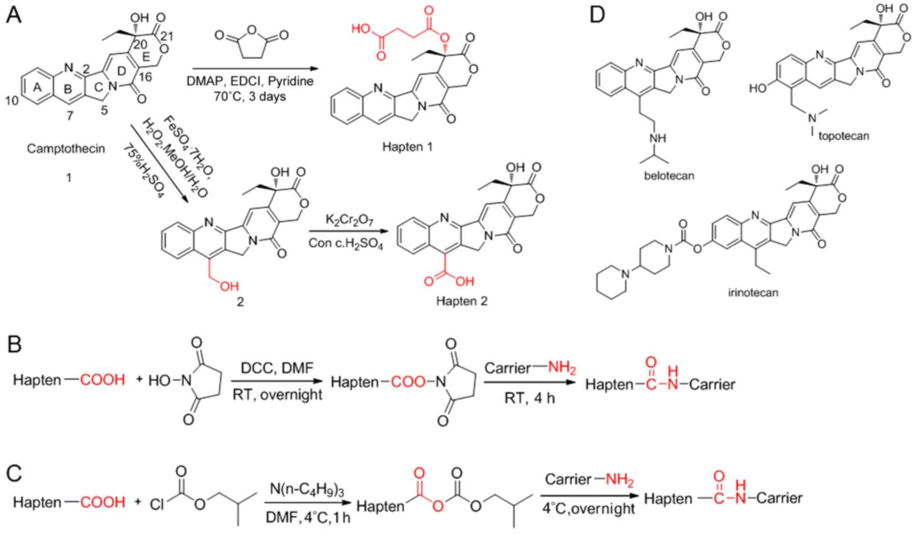 Development of an enzyme‑linked immunosorbent assay for camptothecin