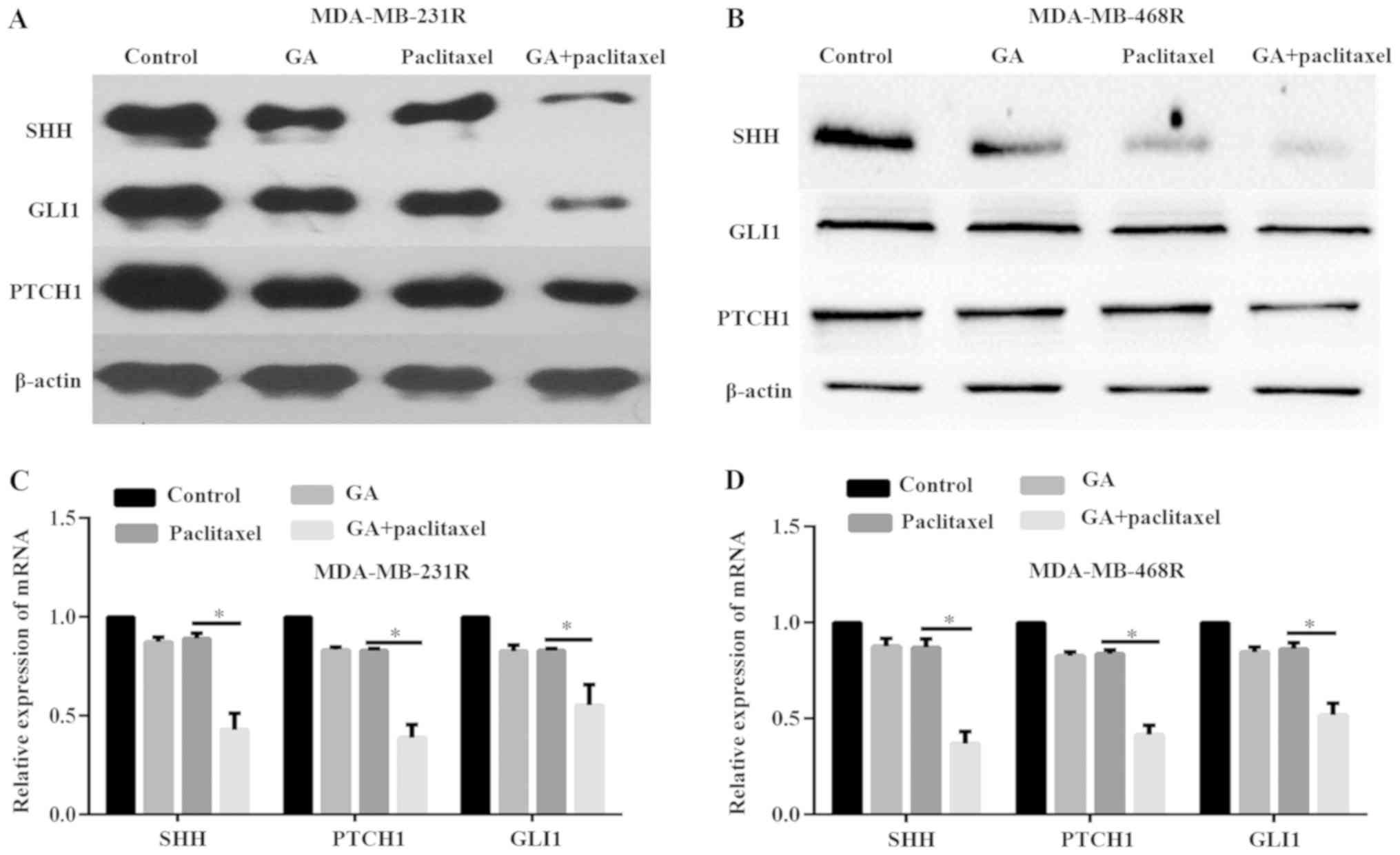 (PDF) Bcr-Abl-Independent Imatinib-Resistant K562 Cells