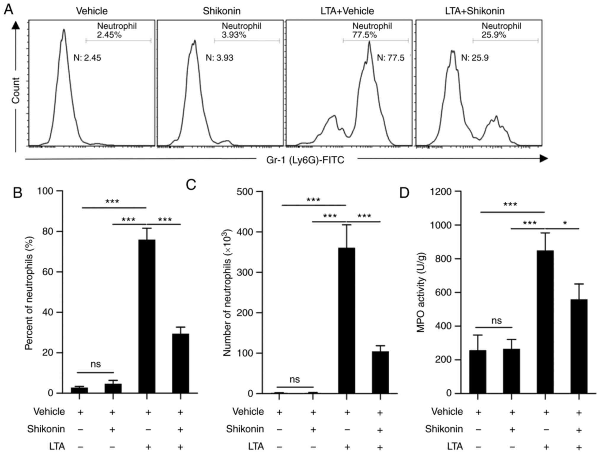 Curdione ameliorates bleomycin-induced pulmonary fibrosis