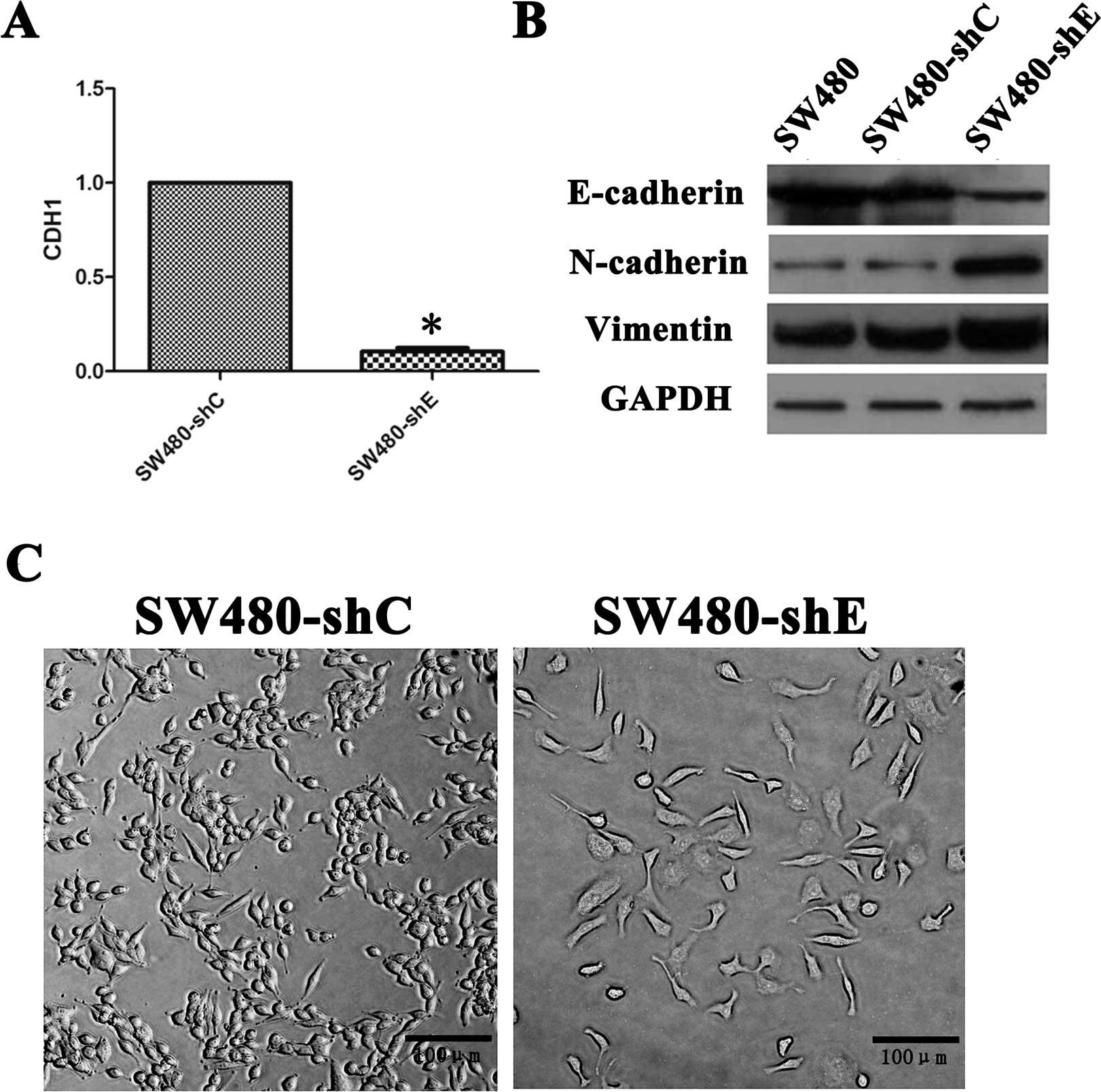 Enrichment of colorectal cancer stem cells through ...