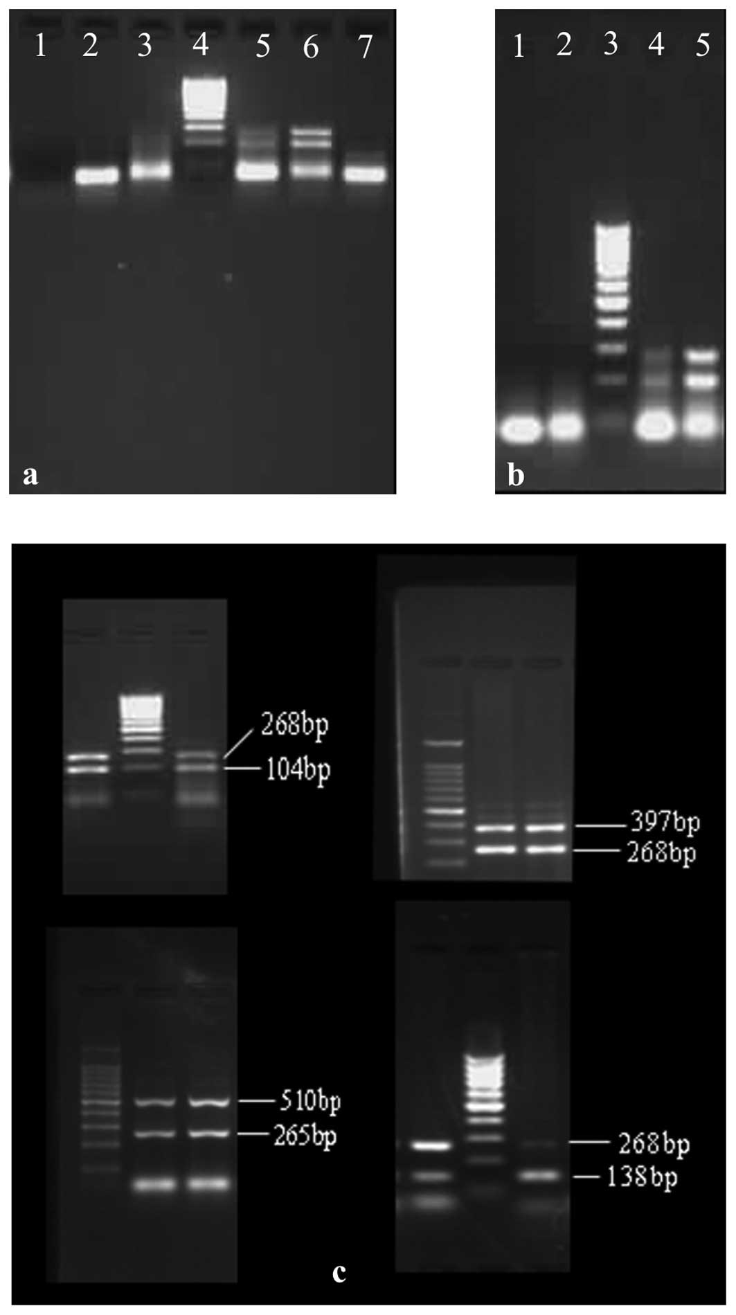 Establishment Of An Optimized Pcr Method Using Sequence
