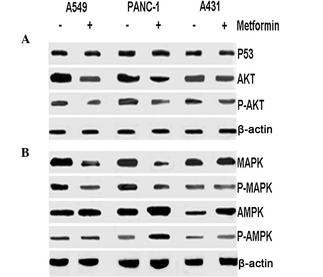 K‑ras Gene Mutation As A Predictor Of Cancer Cell