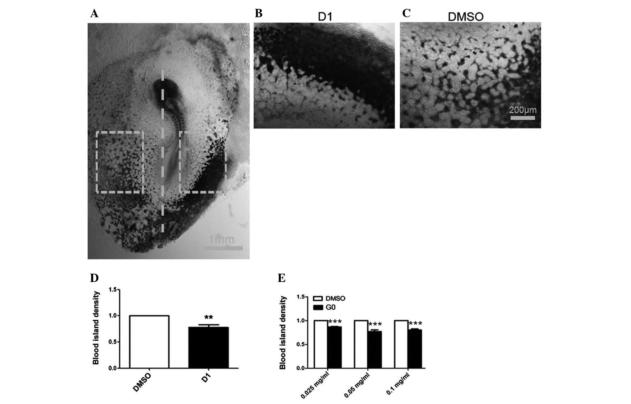 A novel four-step system for screening angiogenesis inhibitors