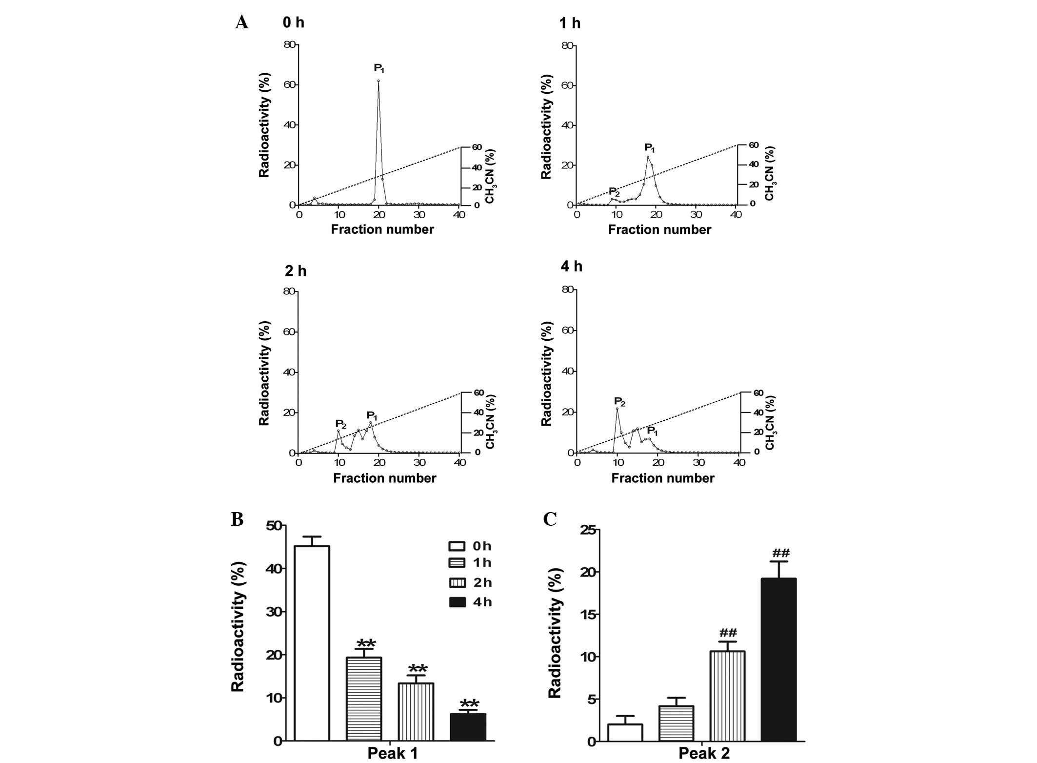 Dendroaspis natriuretic peptide is degraded by a
