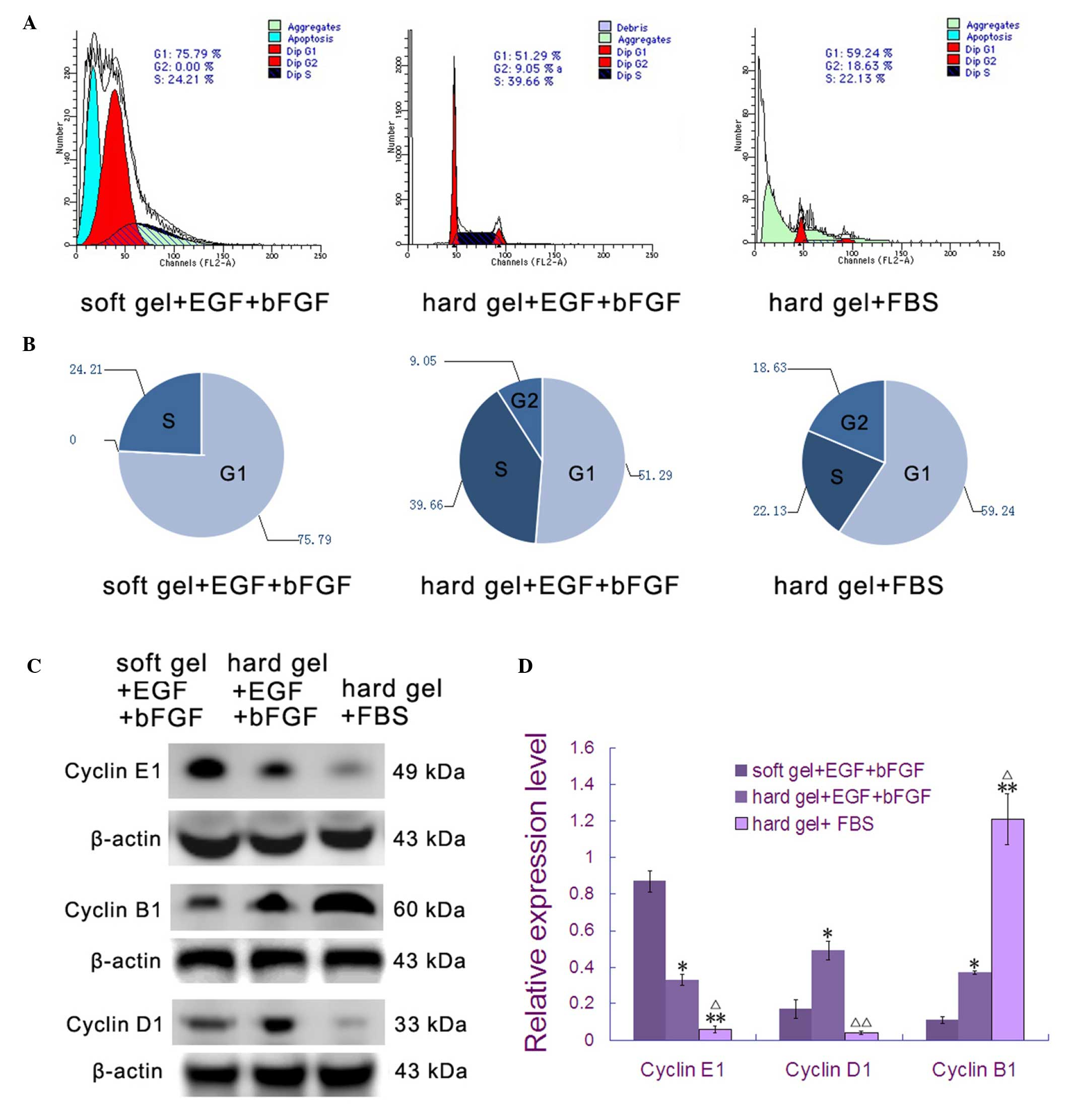 A novel method to limit breast cancer stem cells in states of b pie chart of cell cycle analysis data in part a c expression of cell cycle protein markers by western blotting d graphical presentation of protein nvjuhfo Choice Image
