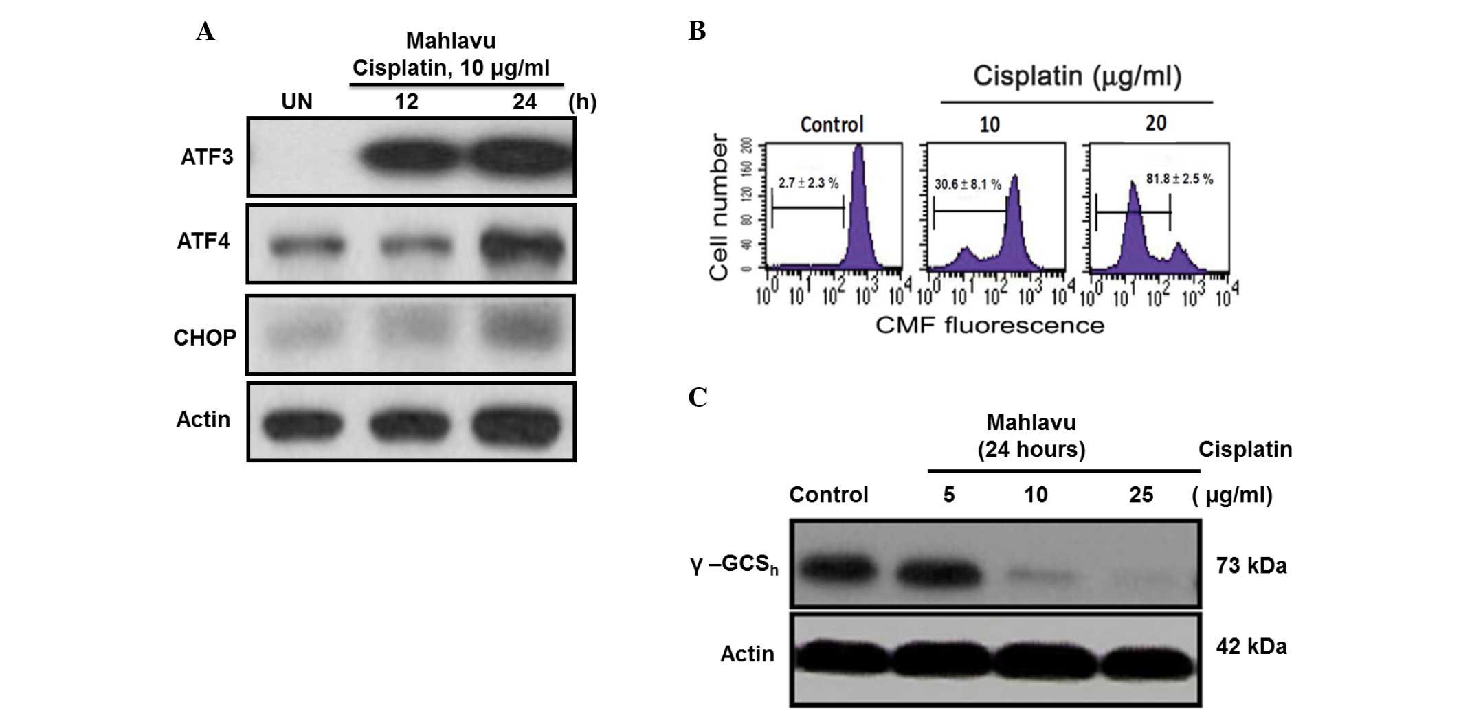 Cisplatin-induced regulation of signal transduction pathways