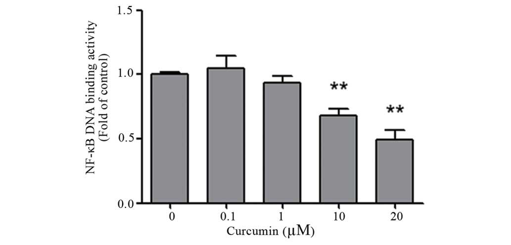 Curcumin Suppresses Colon Cancer Cell Invasion Via Ampk Induced Inhibition Of Nf Kb Upa Activator And Mmp9