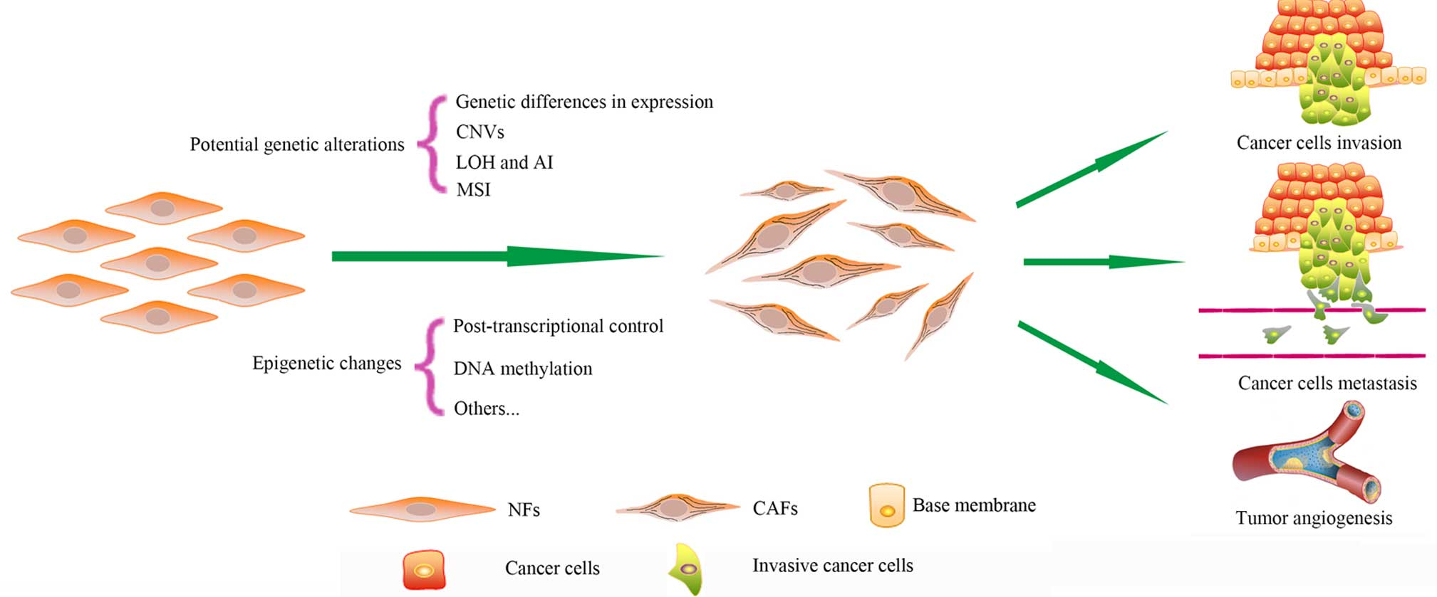 Genetic Alterations And Epigenetic Of Cancerassociated Ih 574 Wiring Circuit Diagram Figure 1 Changes In Cafs Compared To Nfs Possess Numerous Types Potential