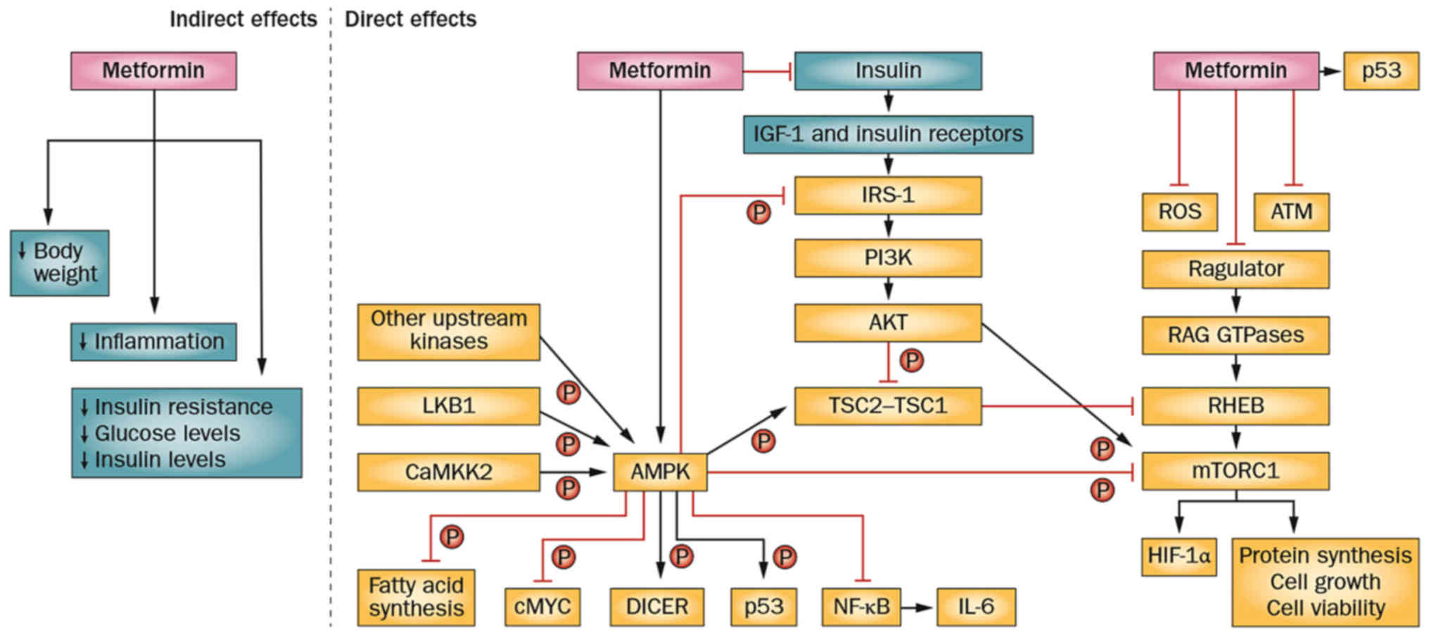 Progress in the application and mechanism of metformin in treating ...