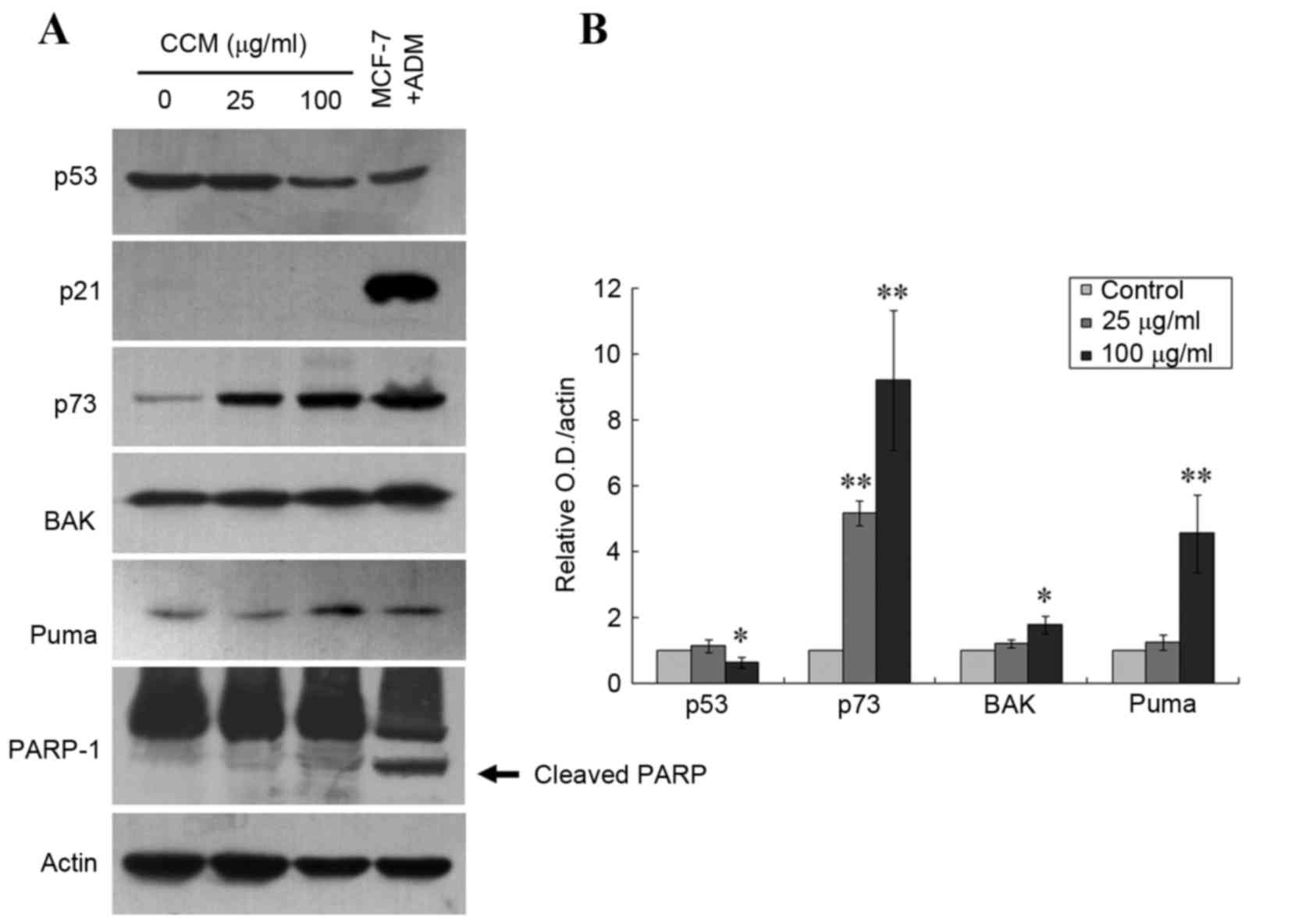 Curcumol Triggers Apoptosis Of P53 Mutant Triple Negative Human Puma 5 Block Diagram A Immunoblotting Demonstrated Increased Protein Levels P73 Bak And Cleaved Parp In Mda Mb 231 Cells Following Treatment With 25 Or 100 G Ml