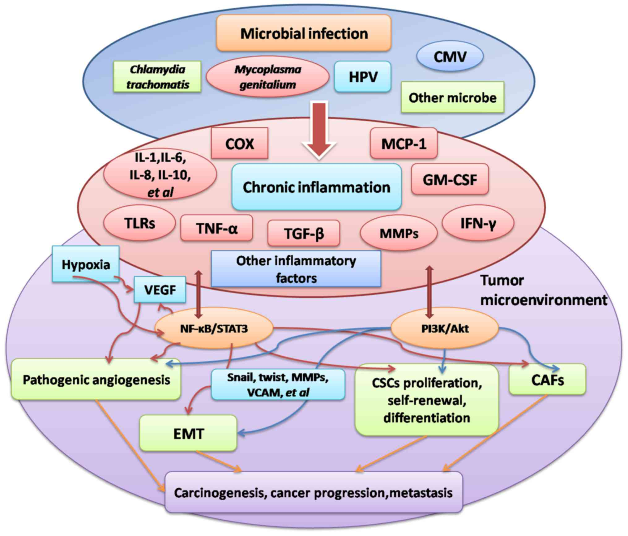 Microbial Infection Inflammation And Epithelial Ovarian Cancer Review