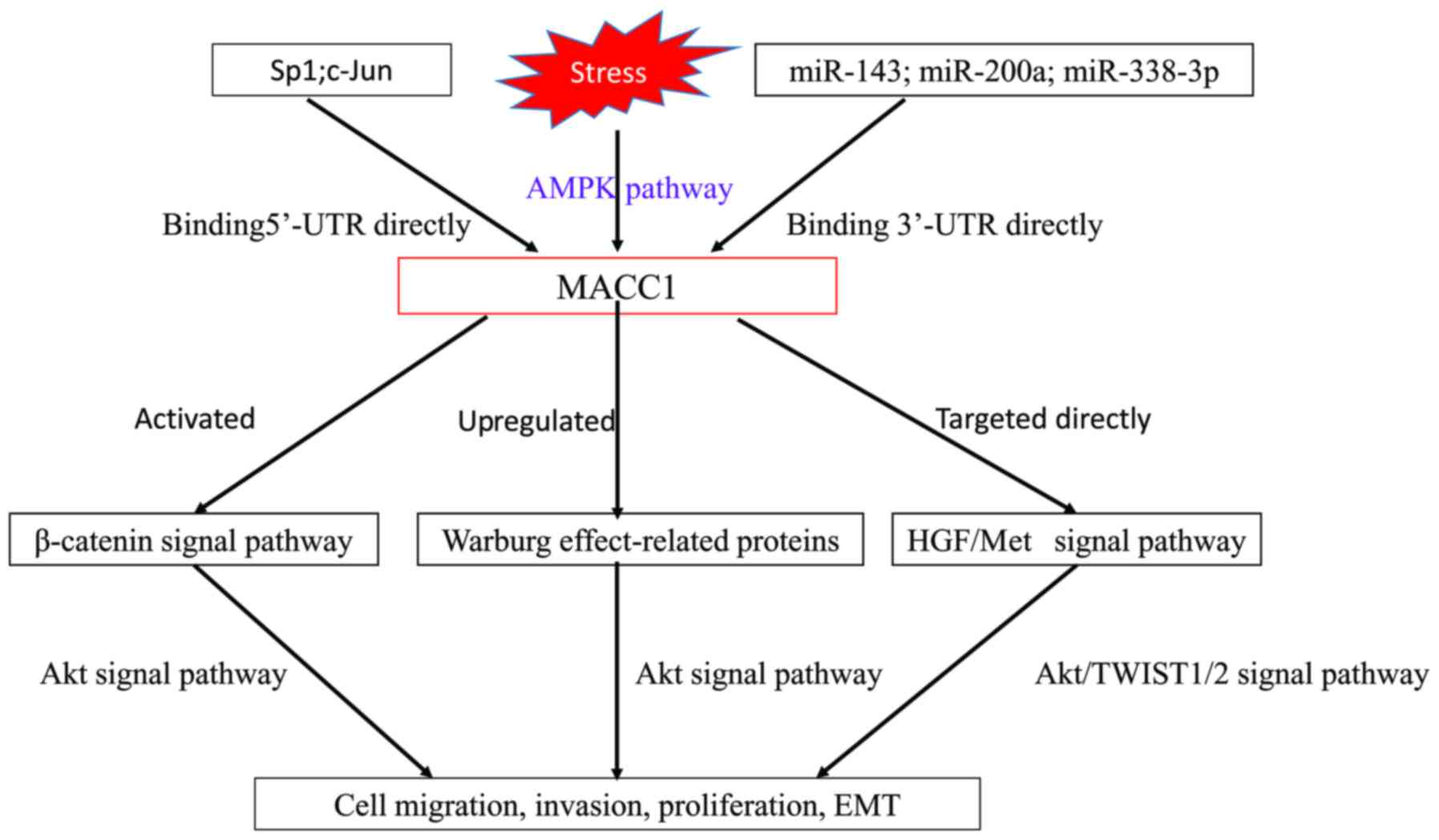 Metastasis Associated In Colon Cancer 1 A Promising Biomarker For The Metastasis And Prognosis Of Colorectal Cancer Review