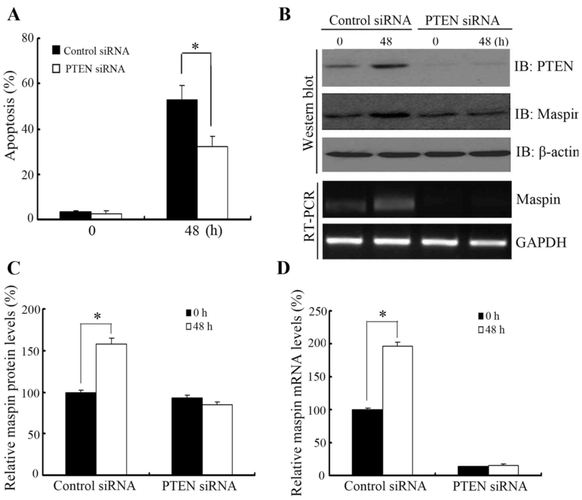 Regulation of paclitaxel sensitivity in prostate cancer cells by effect of knocking down pten on cell apoptosis and maspin levels in 22rv1 cells a paclitaxel induced apoptosis in 22rv1 cells when pten was knocked down ccuart Image collections