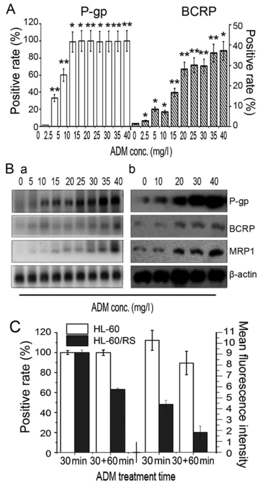 Characteristics of doxorubicin-selected multidrug-resistant
