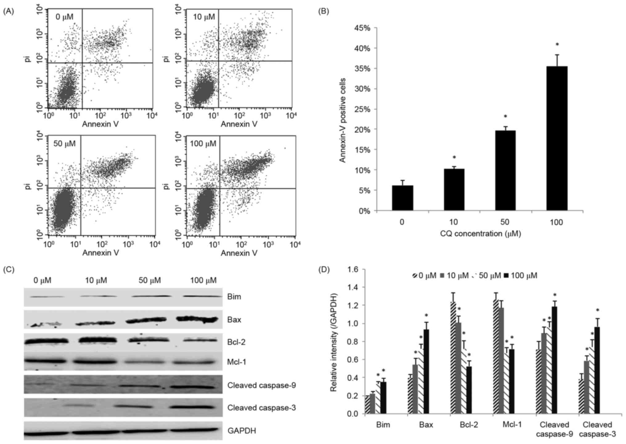 Chloroquine Exerts Antitumor Effects On Nb4 Acute Promyelocytic Lt Pro Dual Function Dark 02r 14 Gr Figure 2 Apoptosis Of Cells Induced By Cq A Were Incubated With Increasing Concentrations For 48 H And Annexin V Pi Staining Was Used To