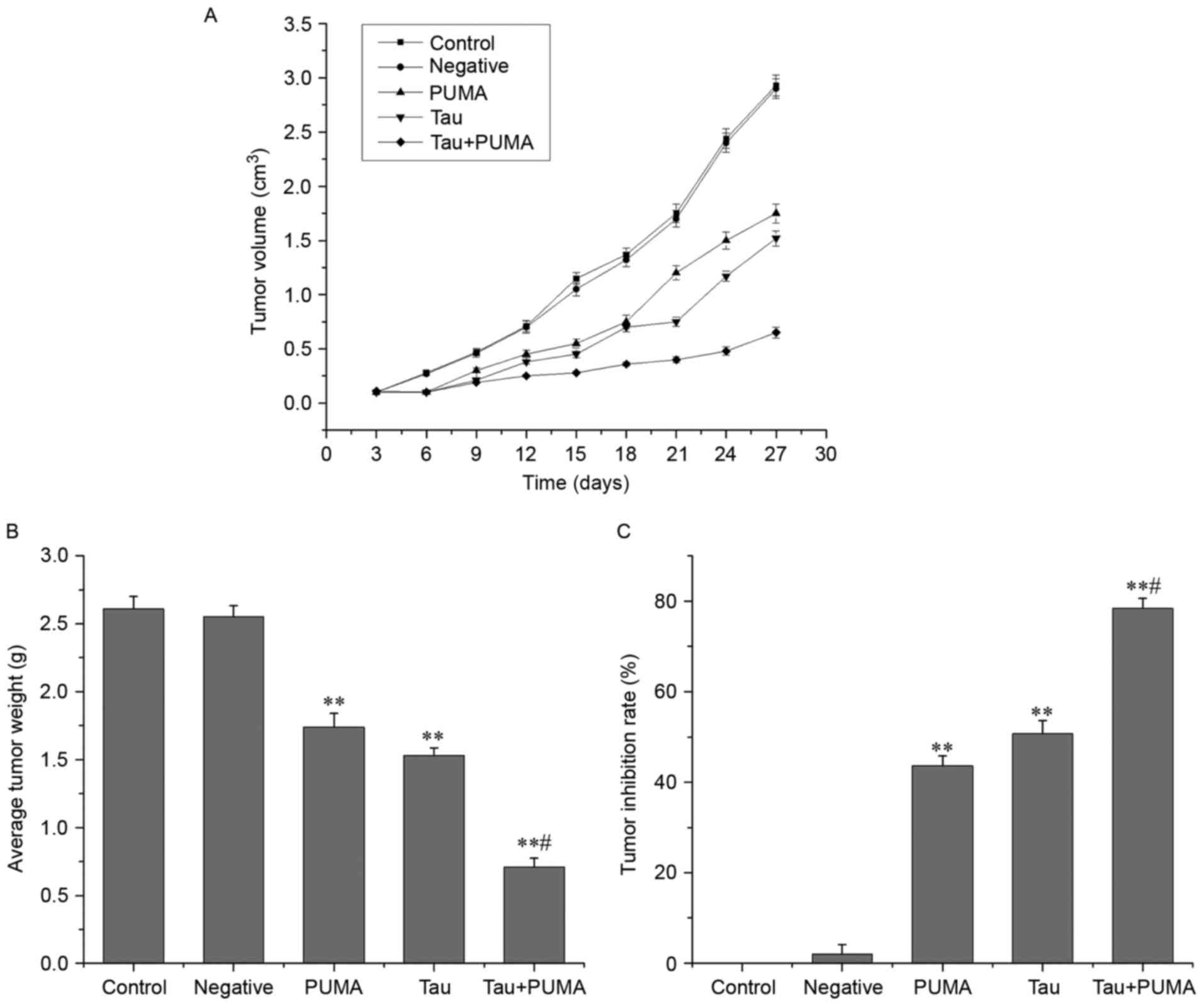 Effect Of Taurine On Cell Proliferation And Apoptosis Human Lung Puma 5 Block Diagram Values Are Expressed As The Mean Sd N5 P001 Vs Negative Or Control P005 Group Tau P53 Upregulated