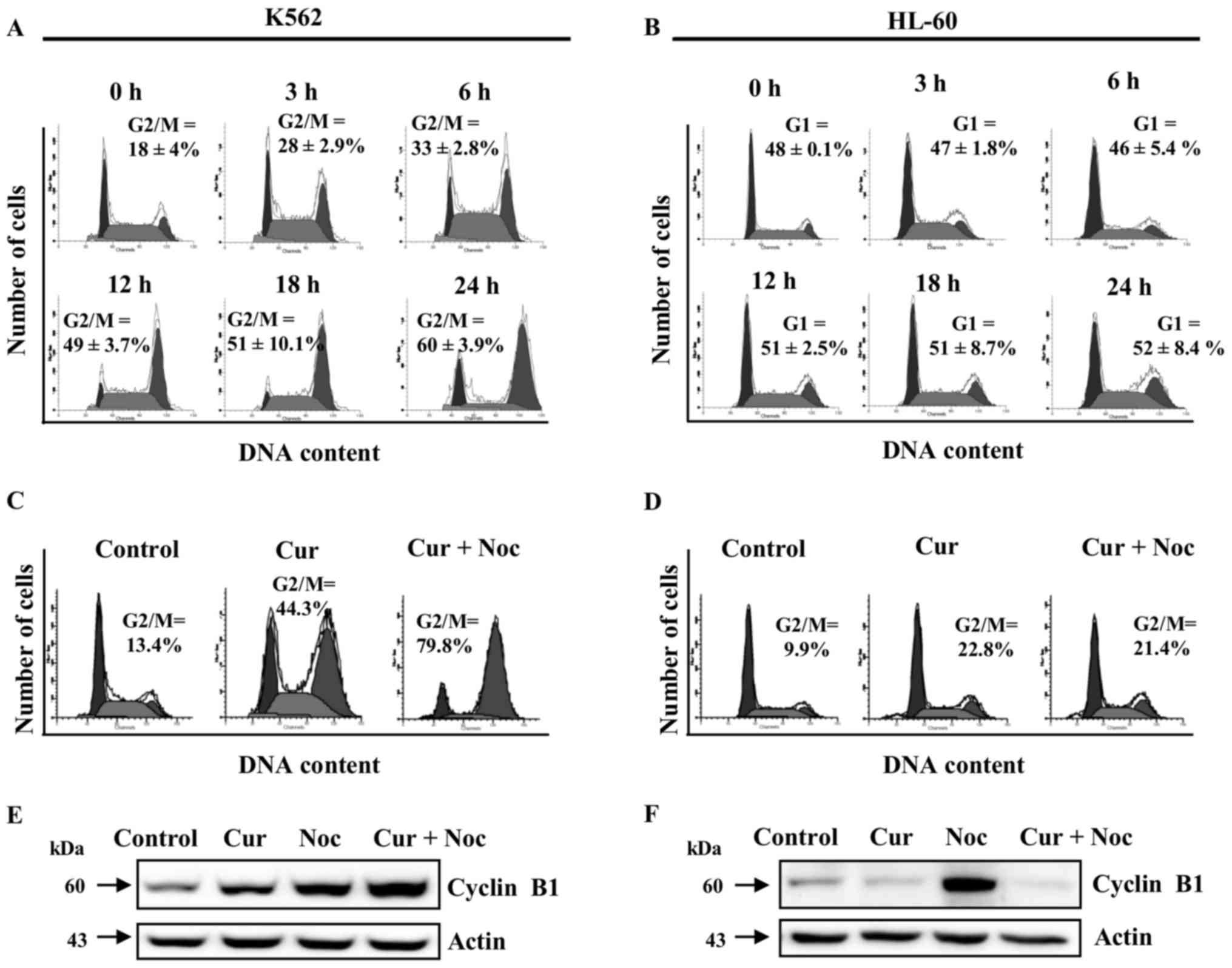 curcumin differentially affects cell cycle and cell death in acutecurcumin differentially alters cell cycle progression in chronic or acute myeloid leukemia cells (a) k562 and (b) hl 60 cells were treated with curcumin 20