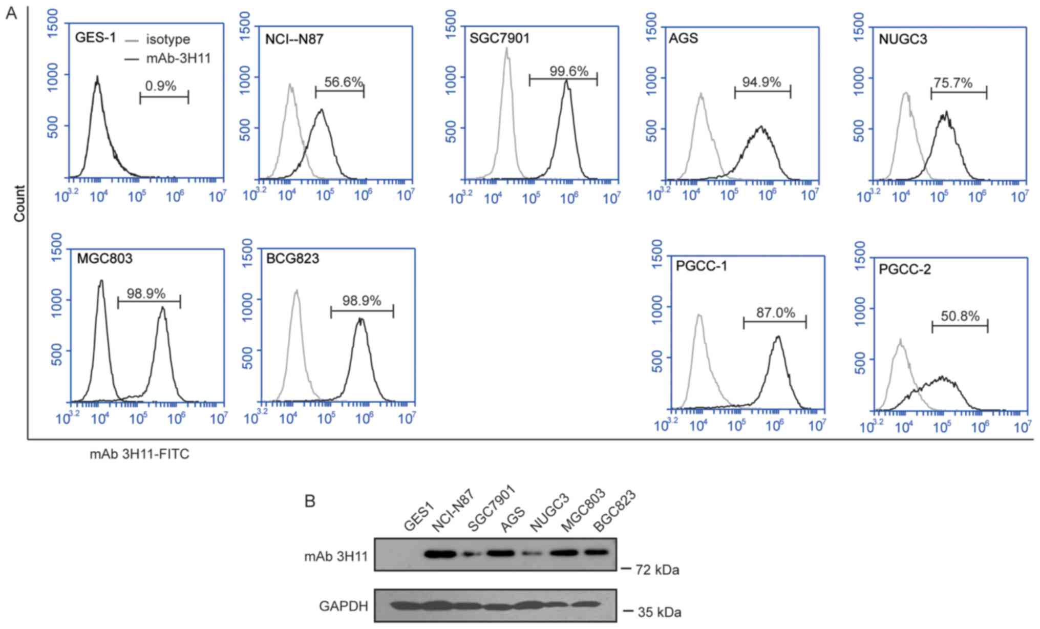 Monoclonal Antibody 3h11 Chimeric Antigen Receptors Enhance T Cell Ory Circuit Diagram Continued Figure 2 Analysis Of The Expression Mab In Gc Lines A Flow Cytometry Histogram Plots Surface
