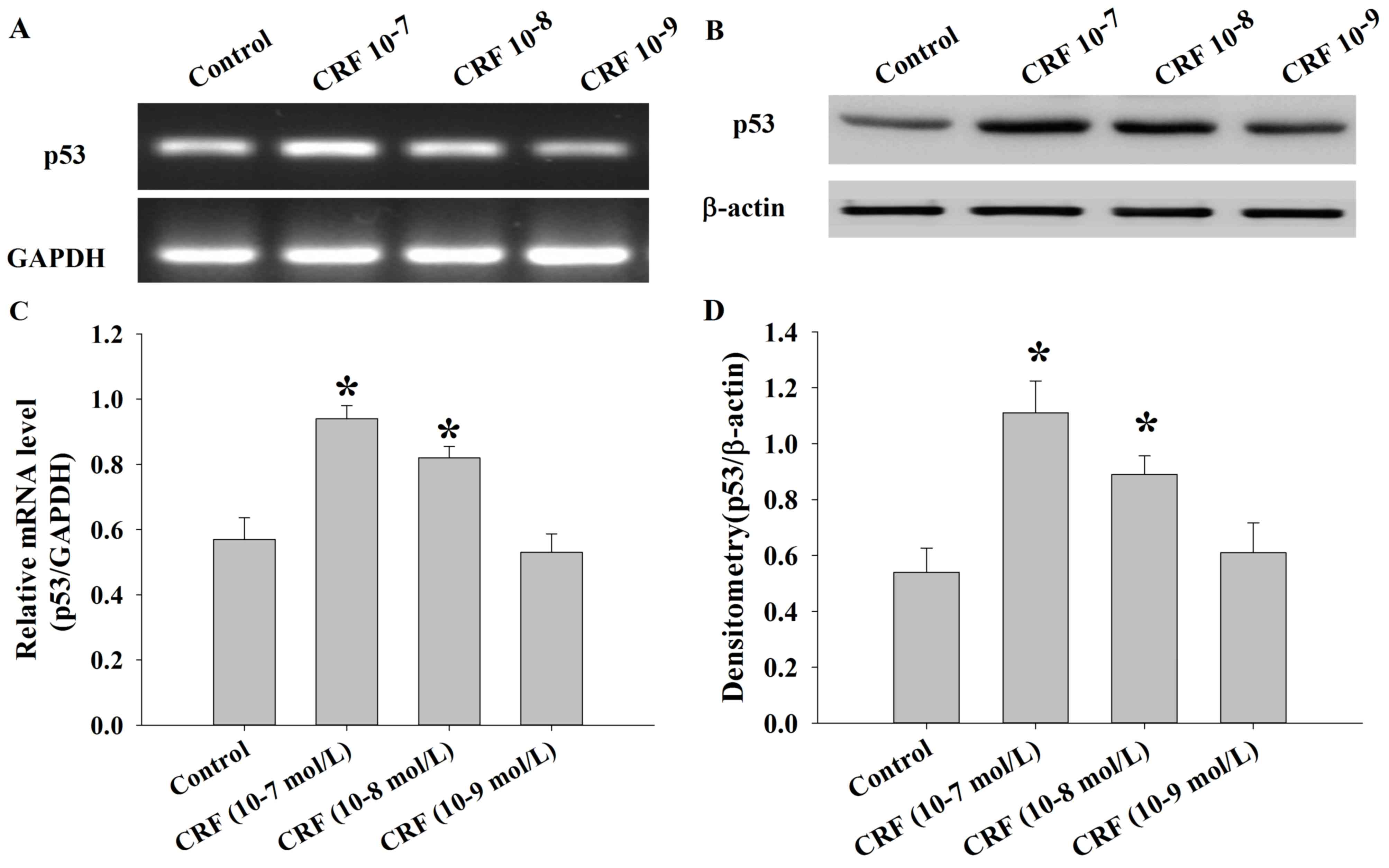 Human corticotrophin releasing factor inhibits cell