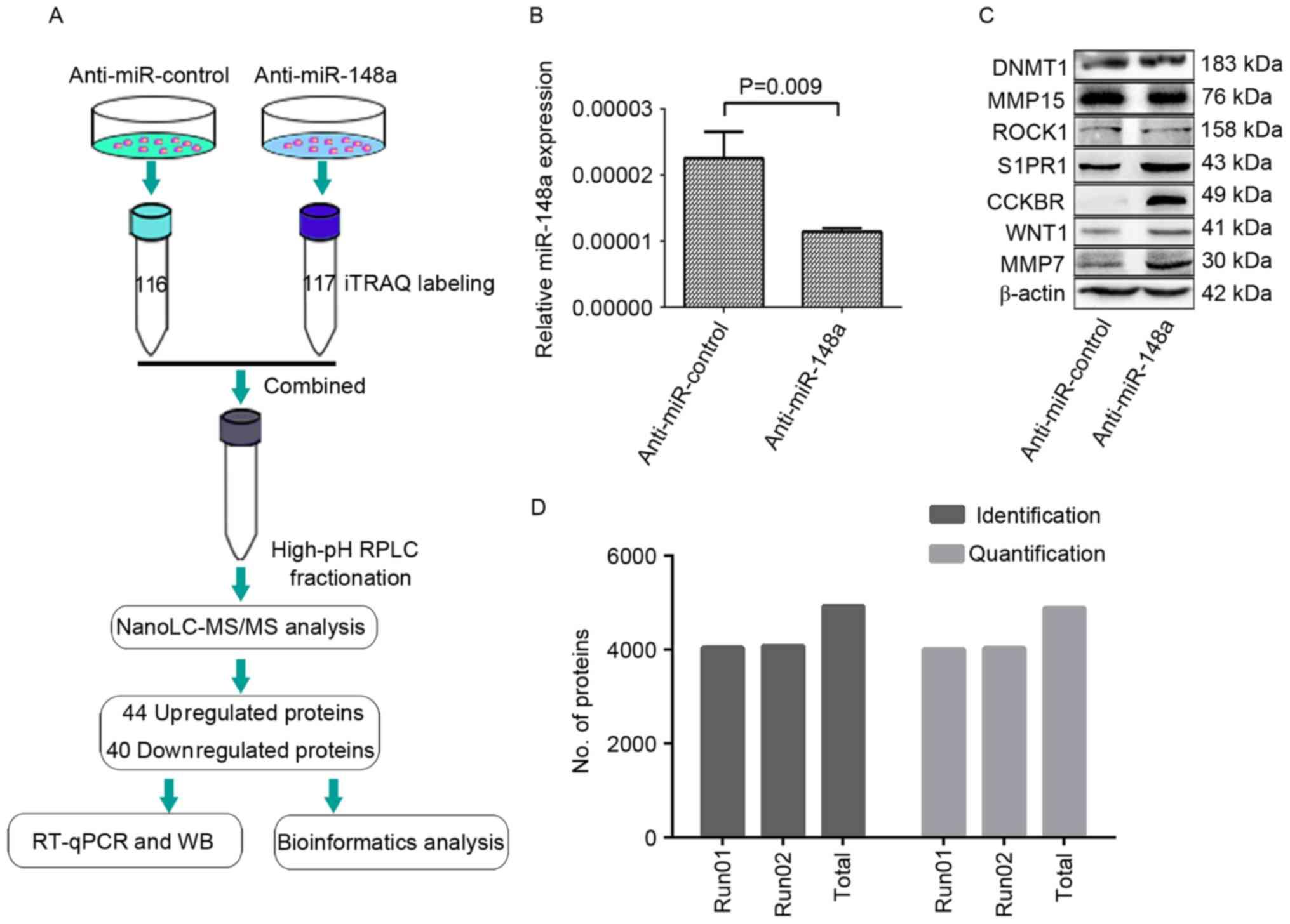 proteomics analysis identifies park7 - HD2031×1456