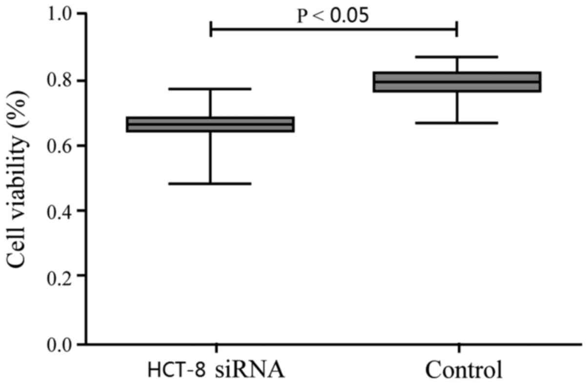 Effect Of Ceacam1 Knockdown In Human Colorectal Cancer Cells