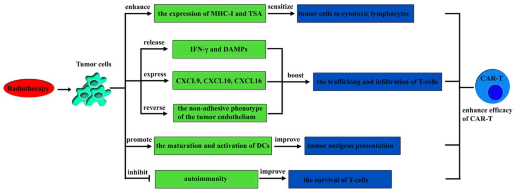 Combination Therapy A Feasibility Strategy For Car T Cell Therapy In The Treatment Of Solid Tumors Review