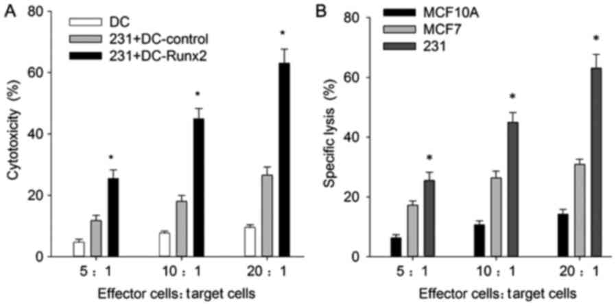 Antitumor Efficacy Of The Runx2‑dendritic Cell Vaccine In