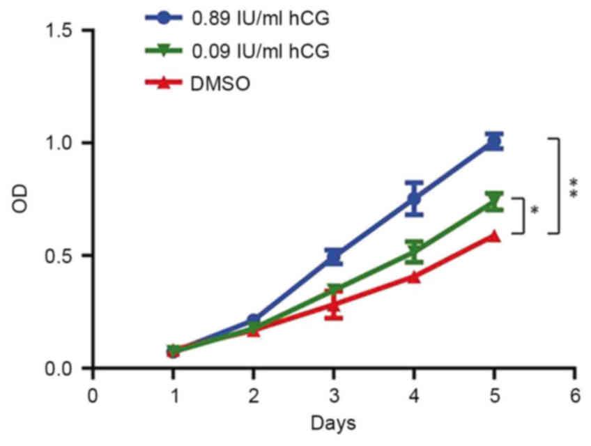 Human chorionic gonadotropin promotes cell proliferation through the