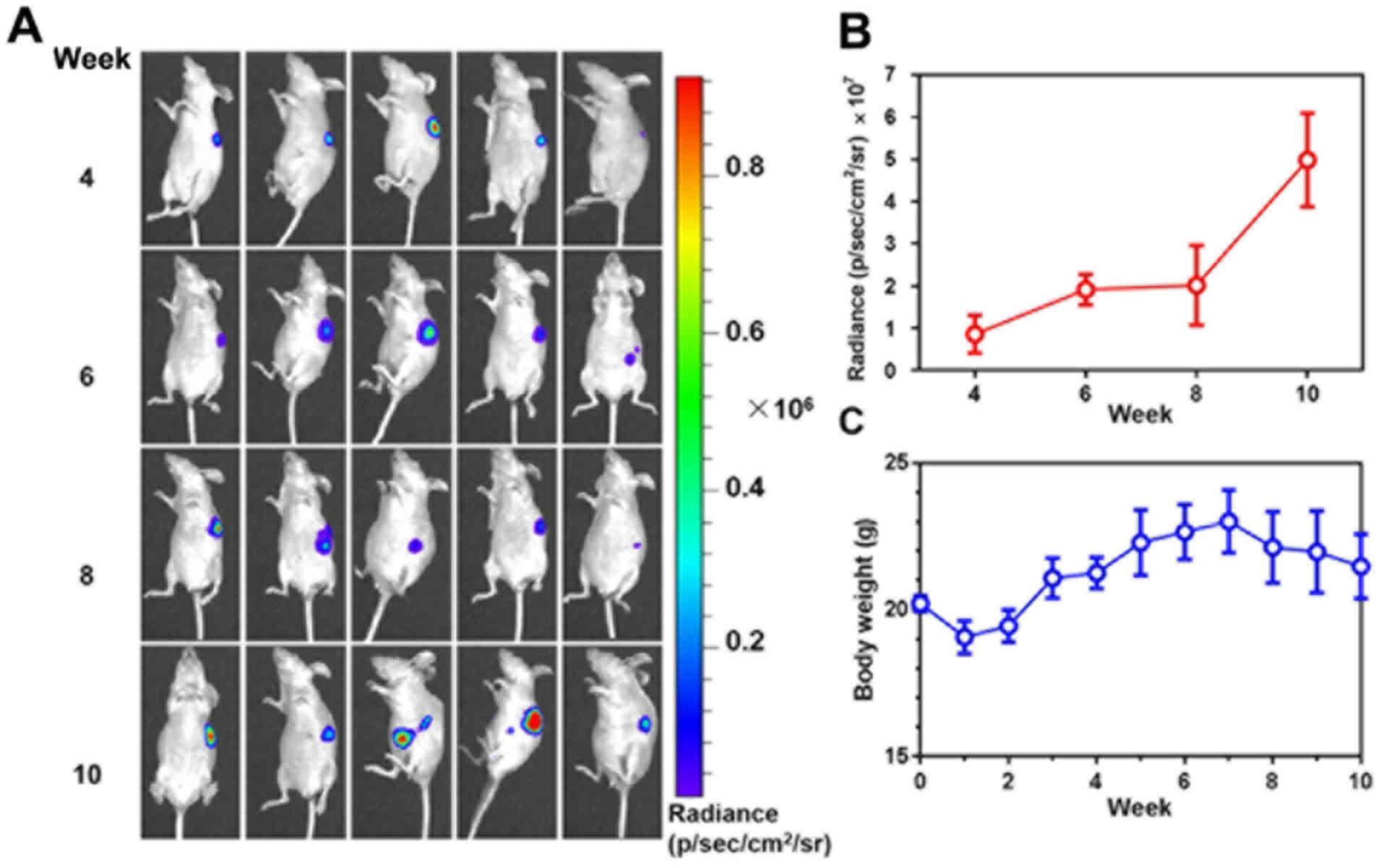 Characterization Of An Orthotopic Gastric Cancer Mouse Model With Lymph Node And Organ Metastases Using Bioluminescence Imaging Corrigendum In 10 3892 Ol 2020 11860