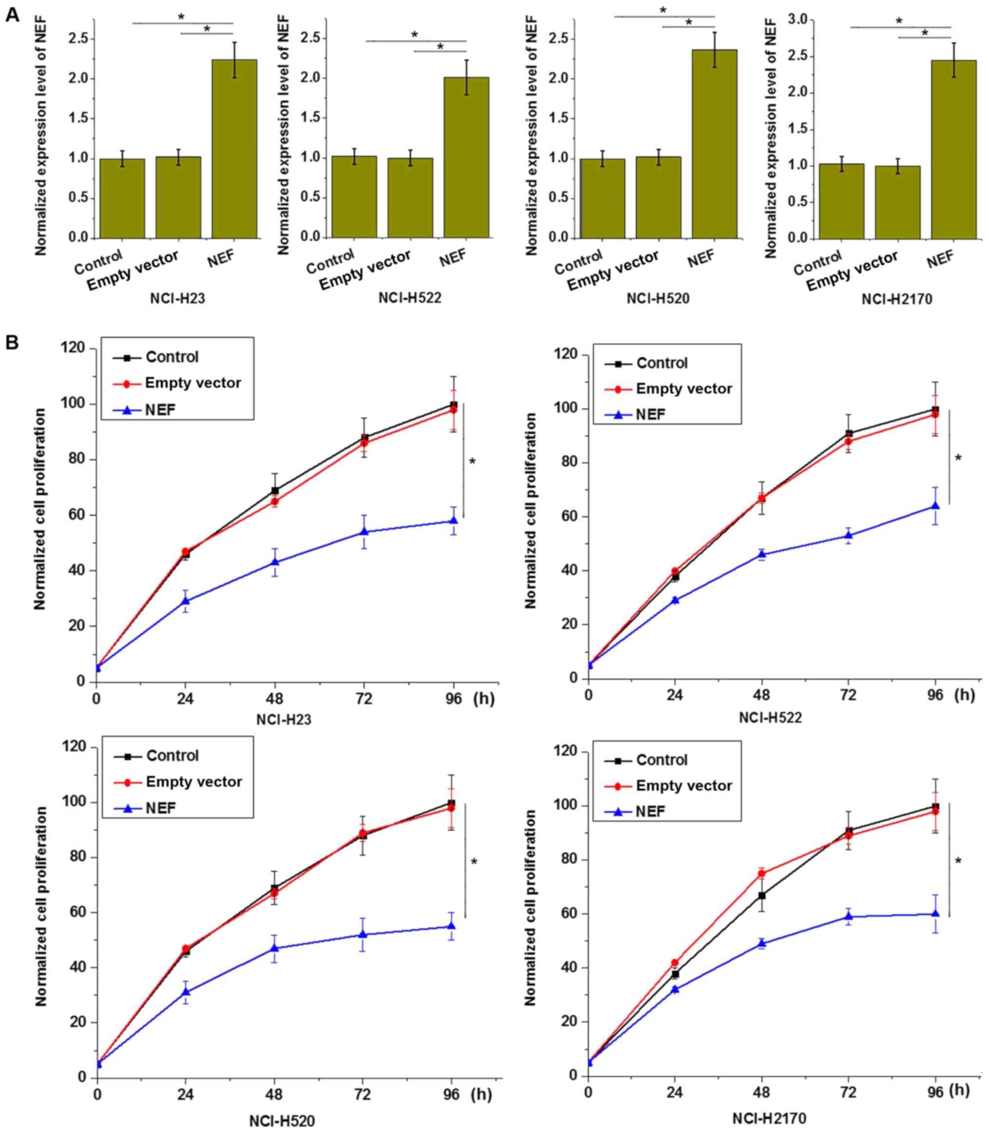 Long non‑coding RNA‑NEF targets glucose transportation to