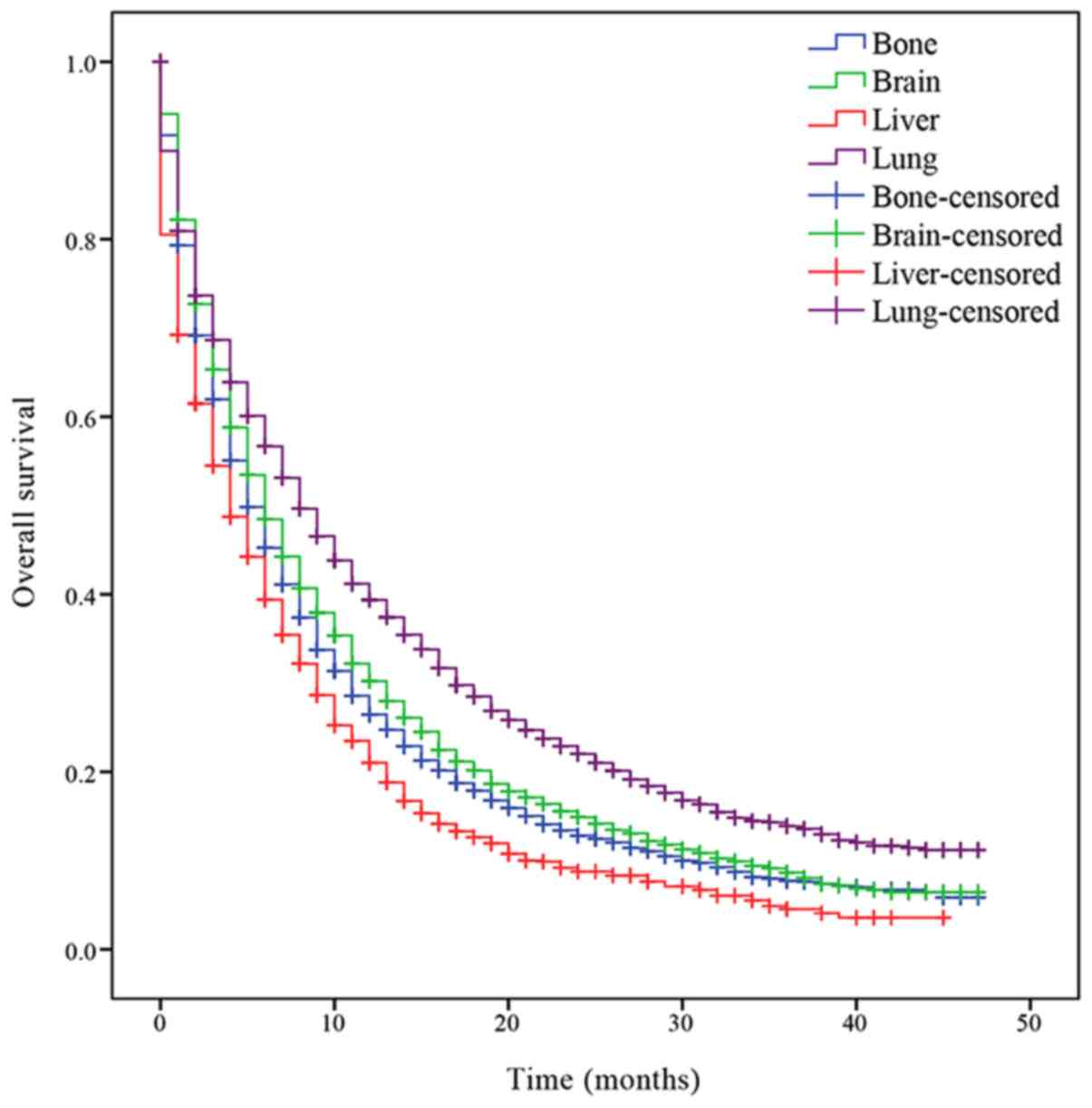 Effects Of Different Metastasis Patterns Surgery And Other Factors On The Prognosis Of Patients With Stage Iv Non Small Cell Lung Cancer A Surveillance Epidemiology And End Results Seer Linked Database Analysis