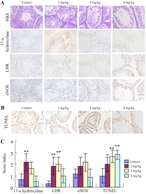 Mechanism of cadmium poisoning on testicular injury in mice
