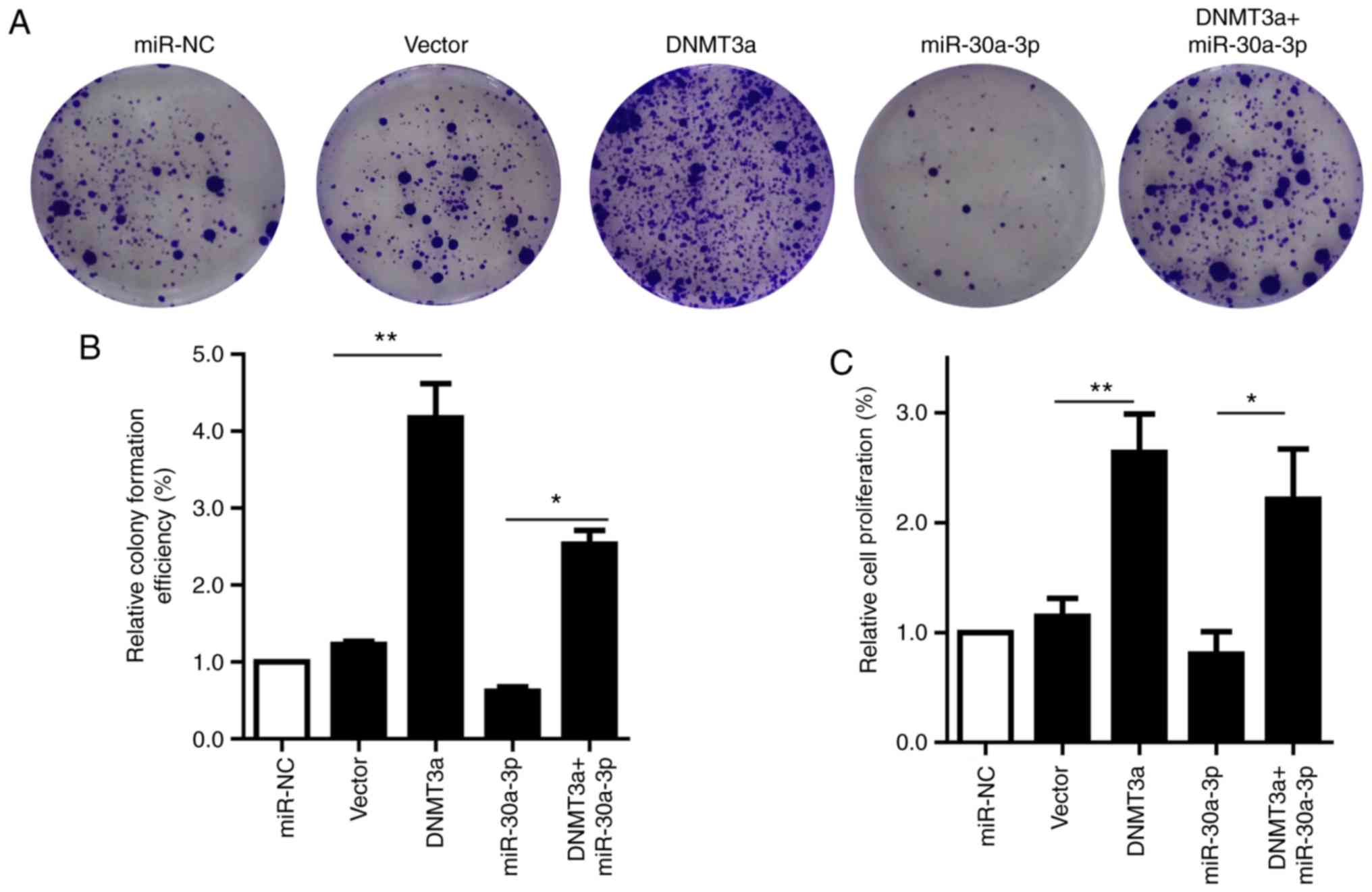 Enhanced antitumor effects by combining an IL-12/anti-DNA