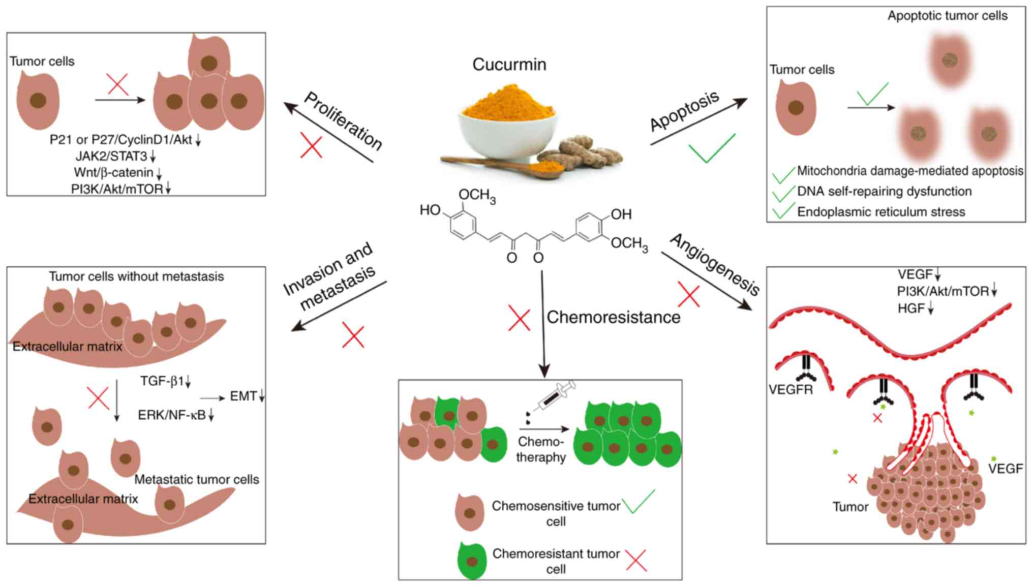 The Roles Of Curcumin In Regulating The Tumor Immunosuppressive Microenvironment Review