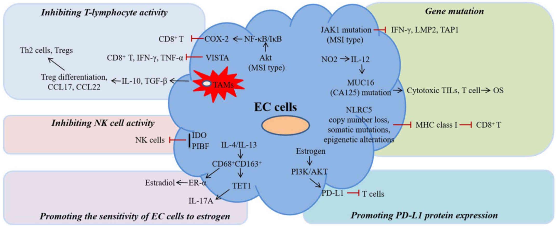 endometrial cancer immunotherapy hpv bogaz tedavisi